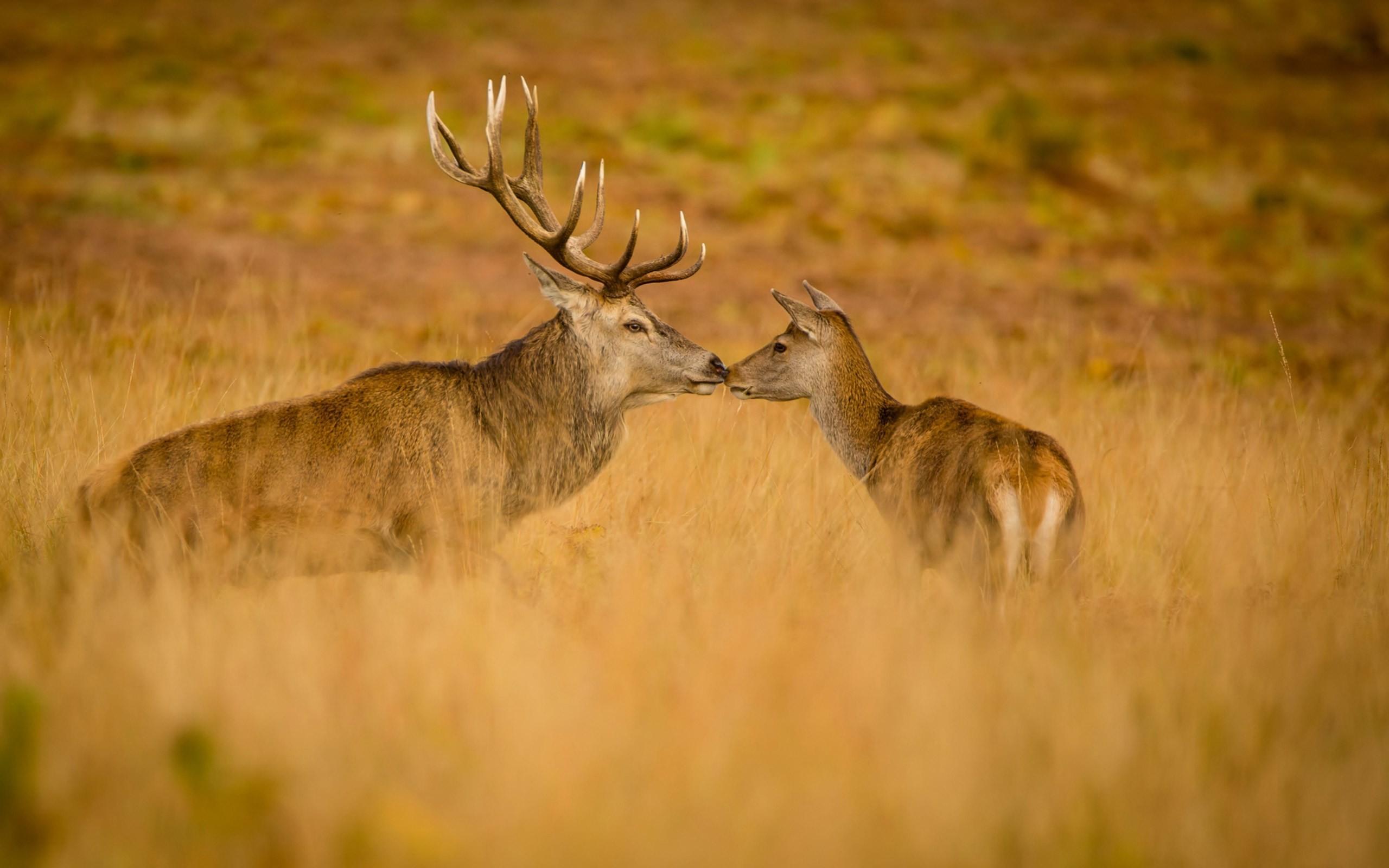 2017-03-03 – deer wallpaper – Full HD Backgrounds, #1856199