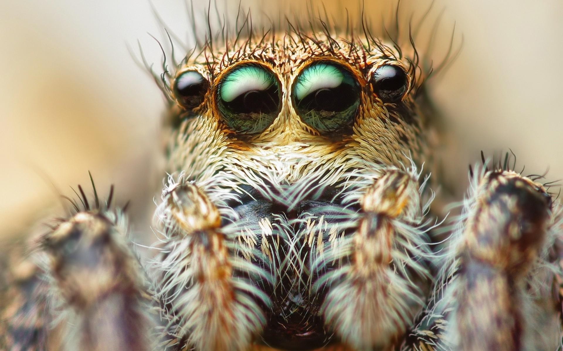 Scary Spider HD Desktop Wallpapers | digitalhint.net