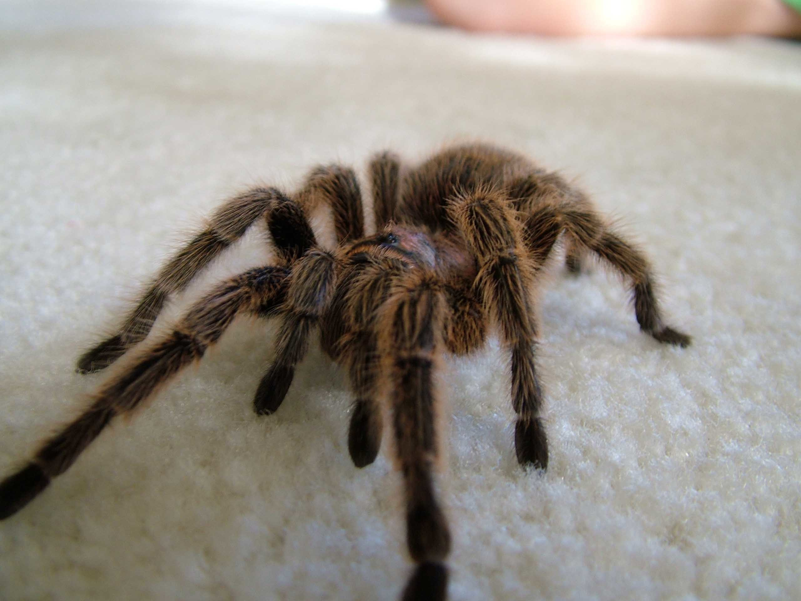 Scary Spider Moving HD Wallpapers – Daily Backgrounds in HD