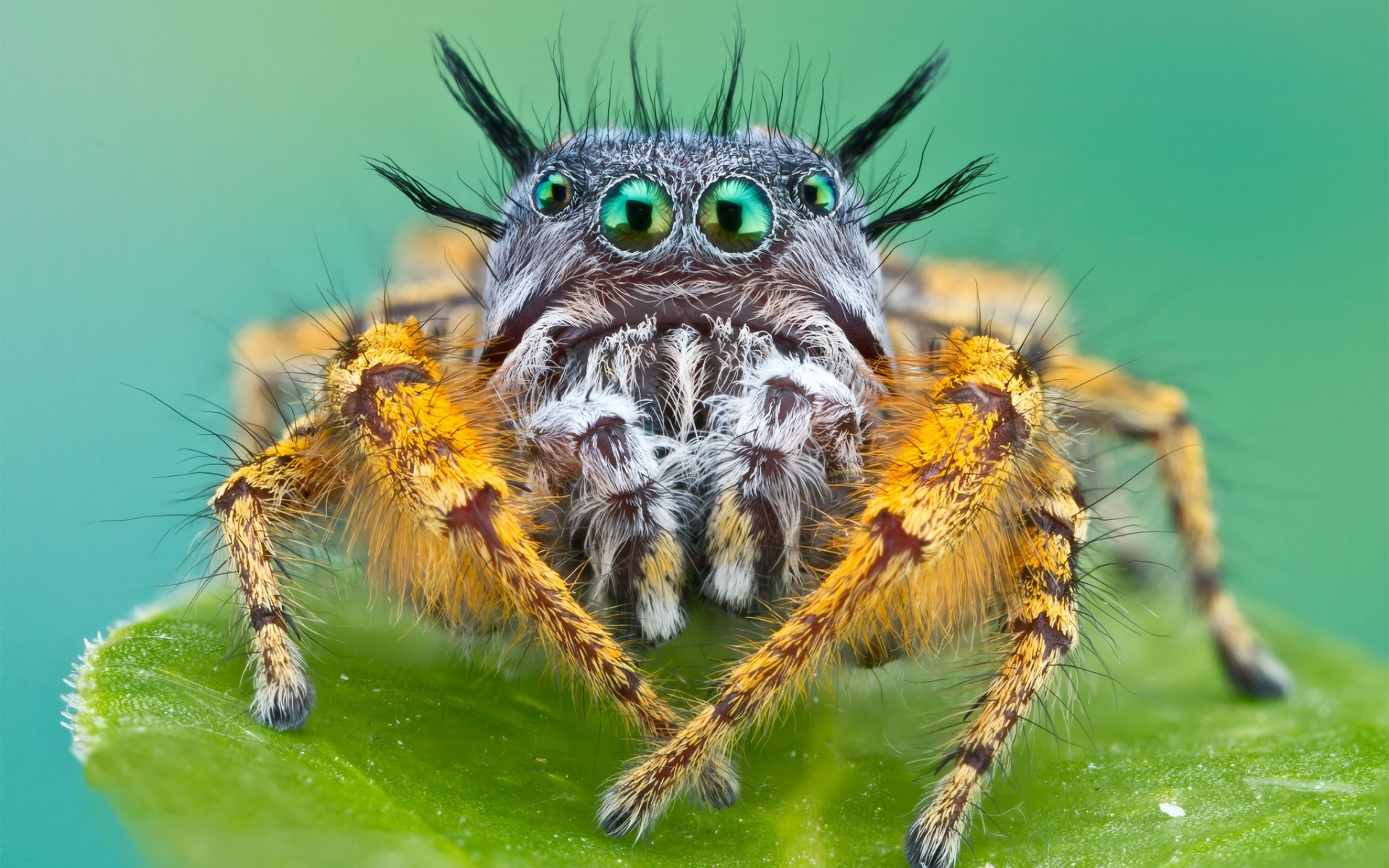 Animals insects spider face eyes creepy spooky legs alien wallpaper |  | 27035 | WallpaperUP