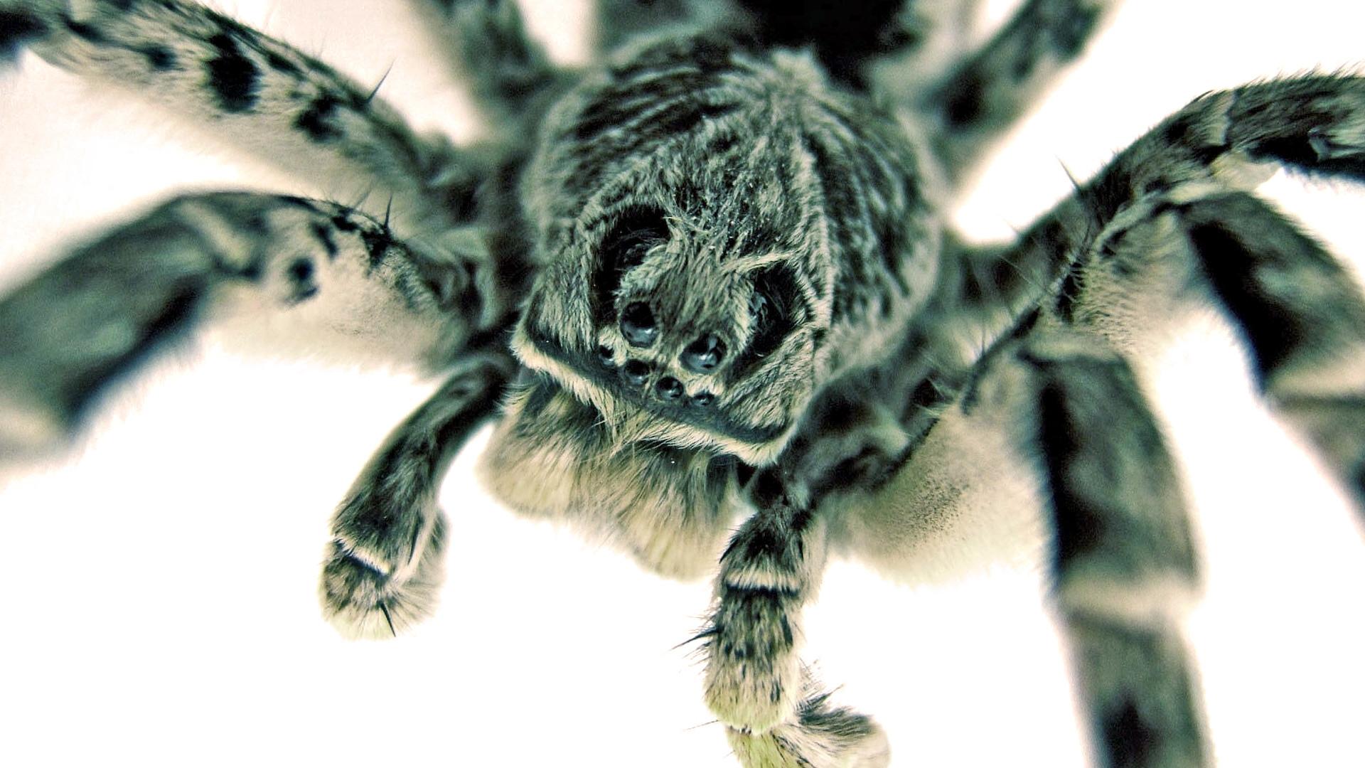 spider wallpapers – weddingdressin.com
