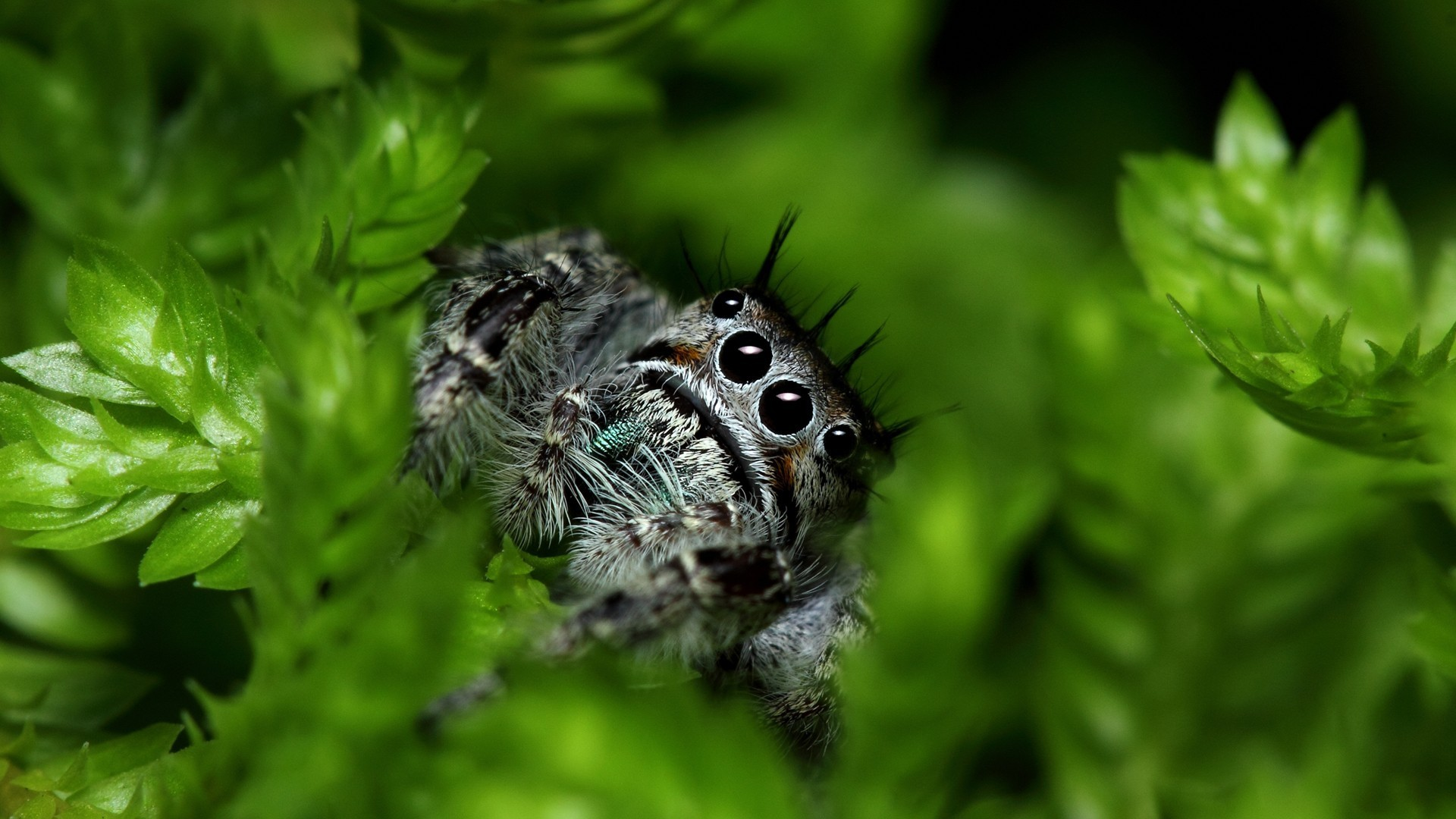 Spider Wallpaper Scary Themes