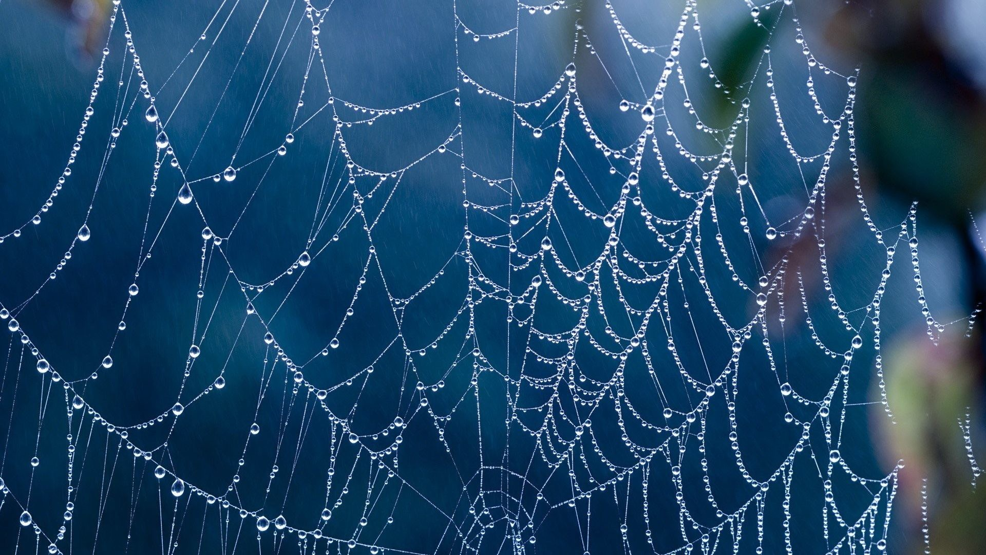 Creepy Tag – Creepy Spider Webs Hd Full Size Nature Wallpaper for HD 16:9