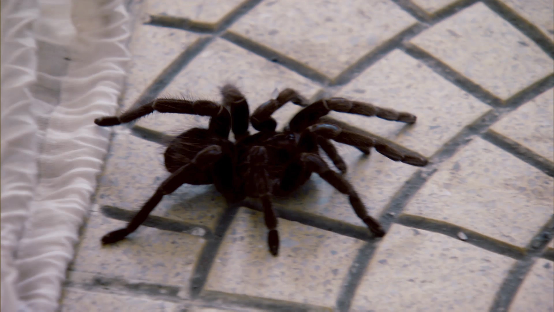 Dead Scared of Spiders – Locked Up Abroad Video – National Geographic  Channel