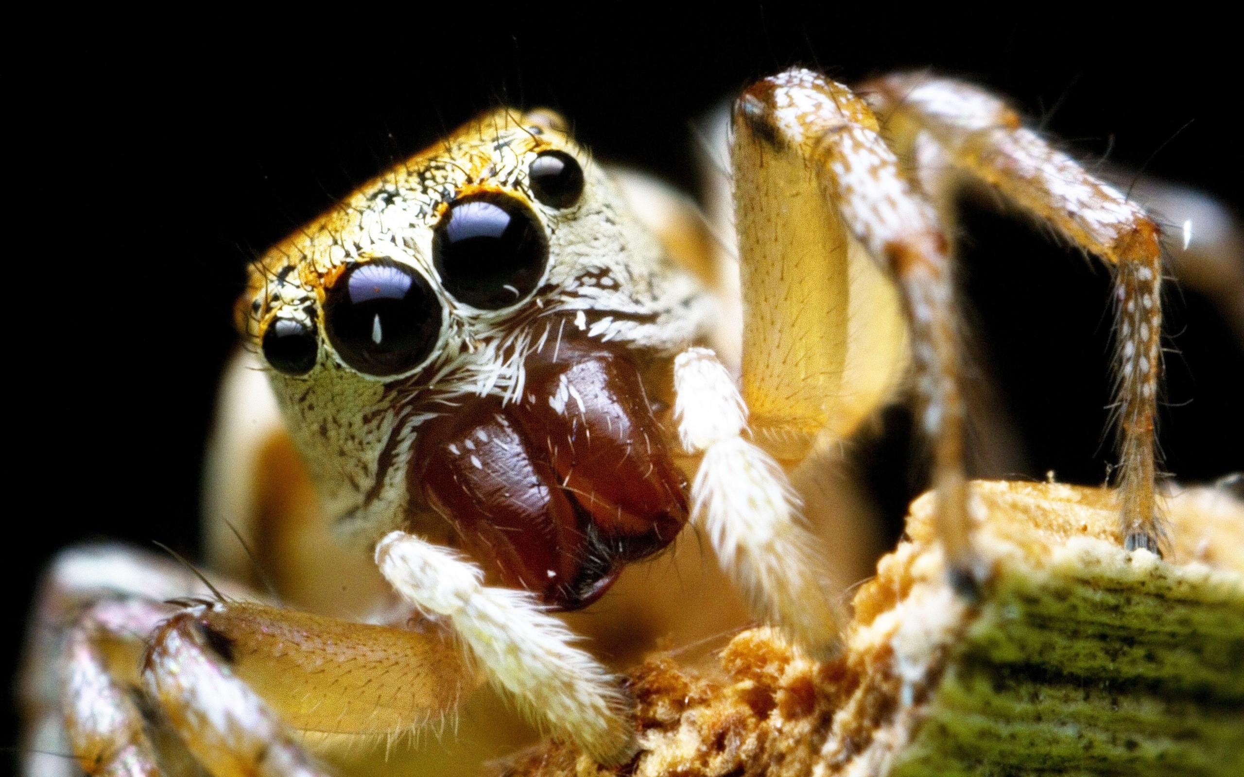 Spider Scary Eye Desktop Background. Download …