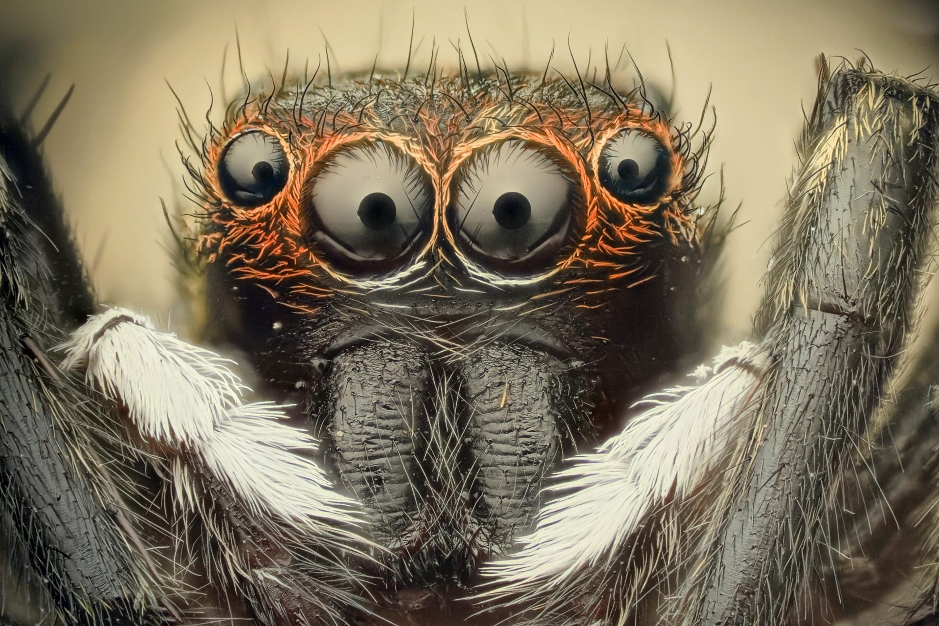 Spiders Wallpaper Spiders