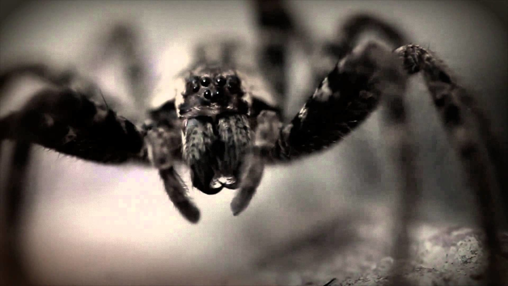 Creepy Spiders and Creepy Music