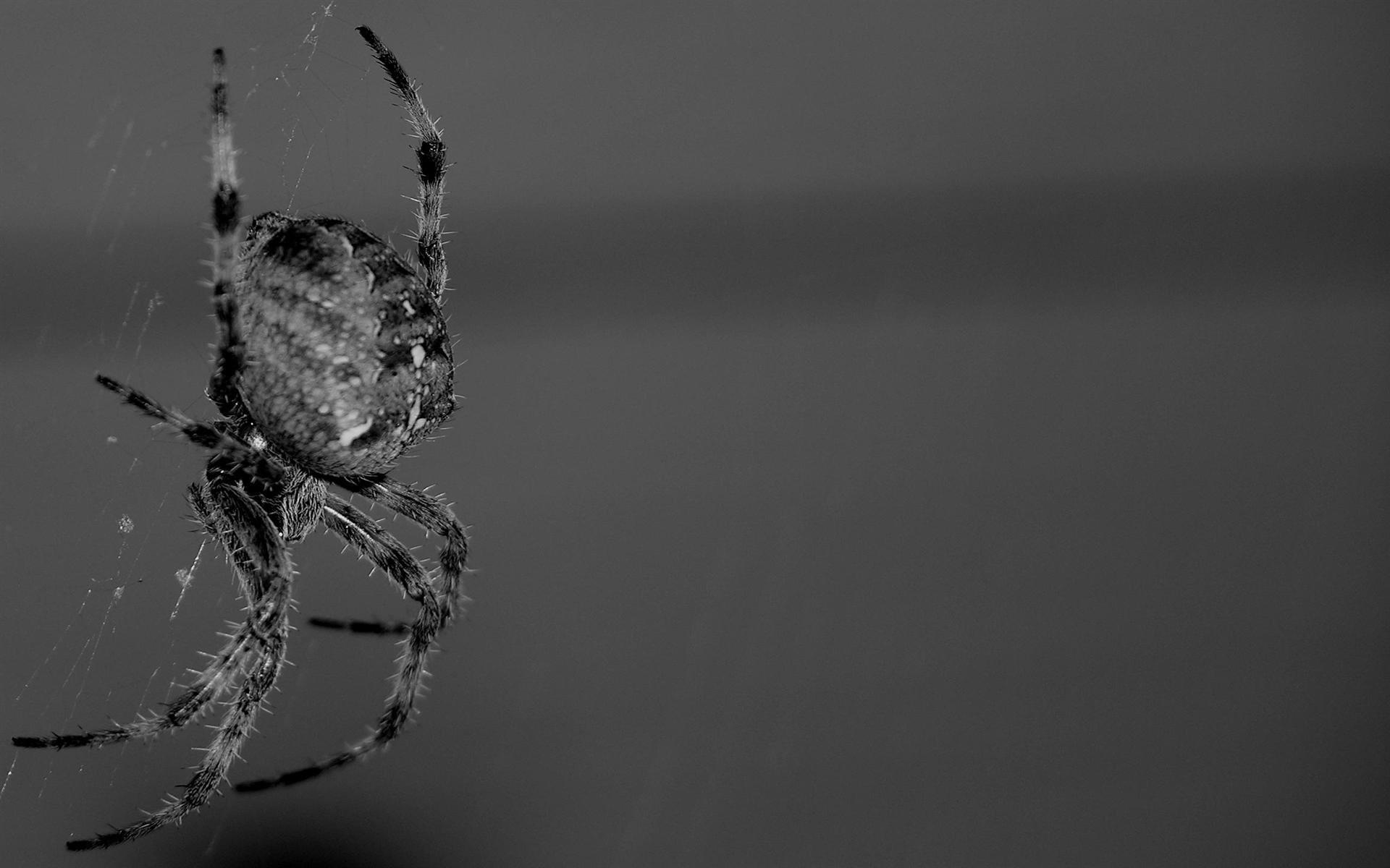 Spider 412432