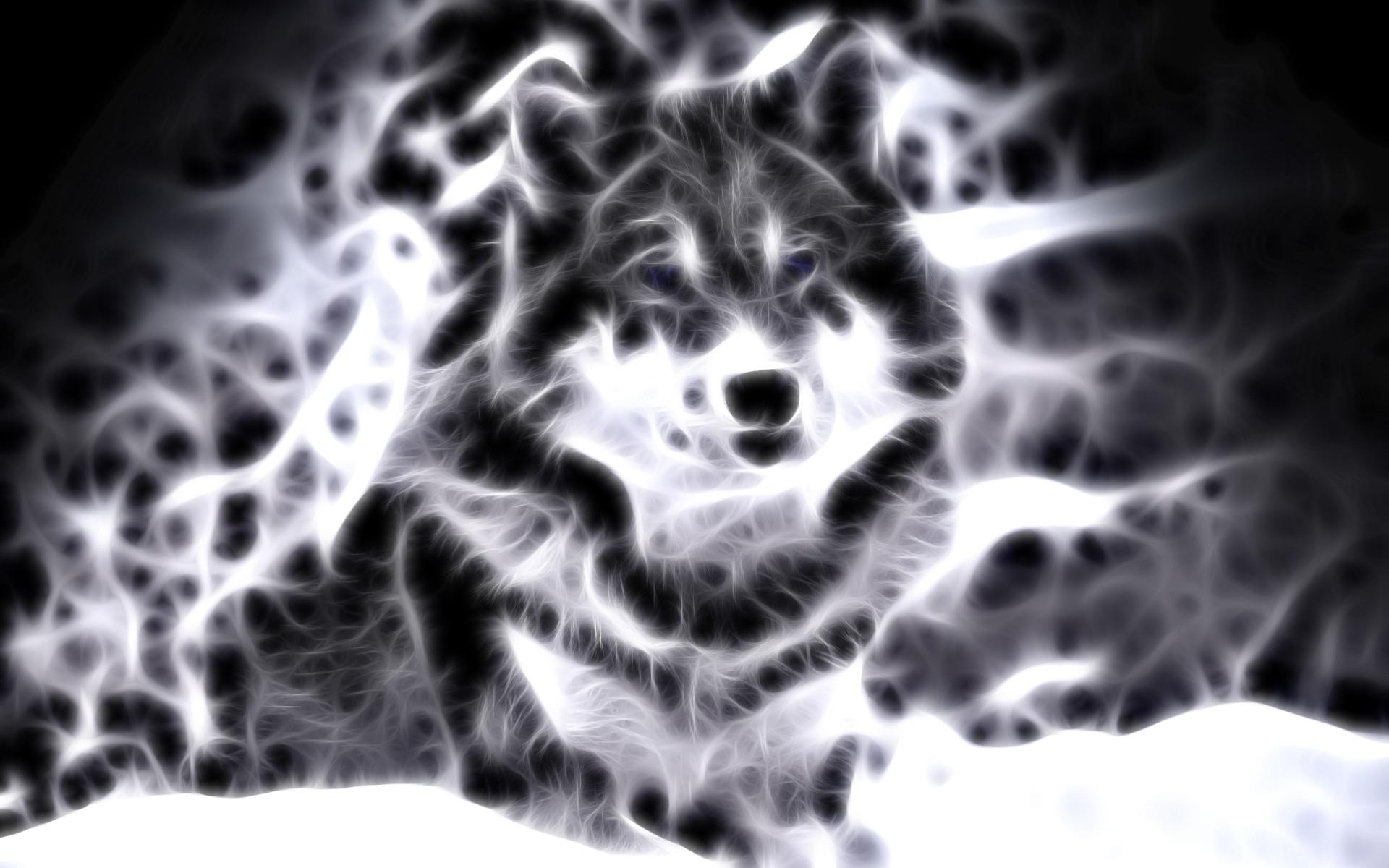 lightanimals | Cool Animal Wallpaper Light Wolf Wallpapers For gt Cool  Animal