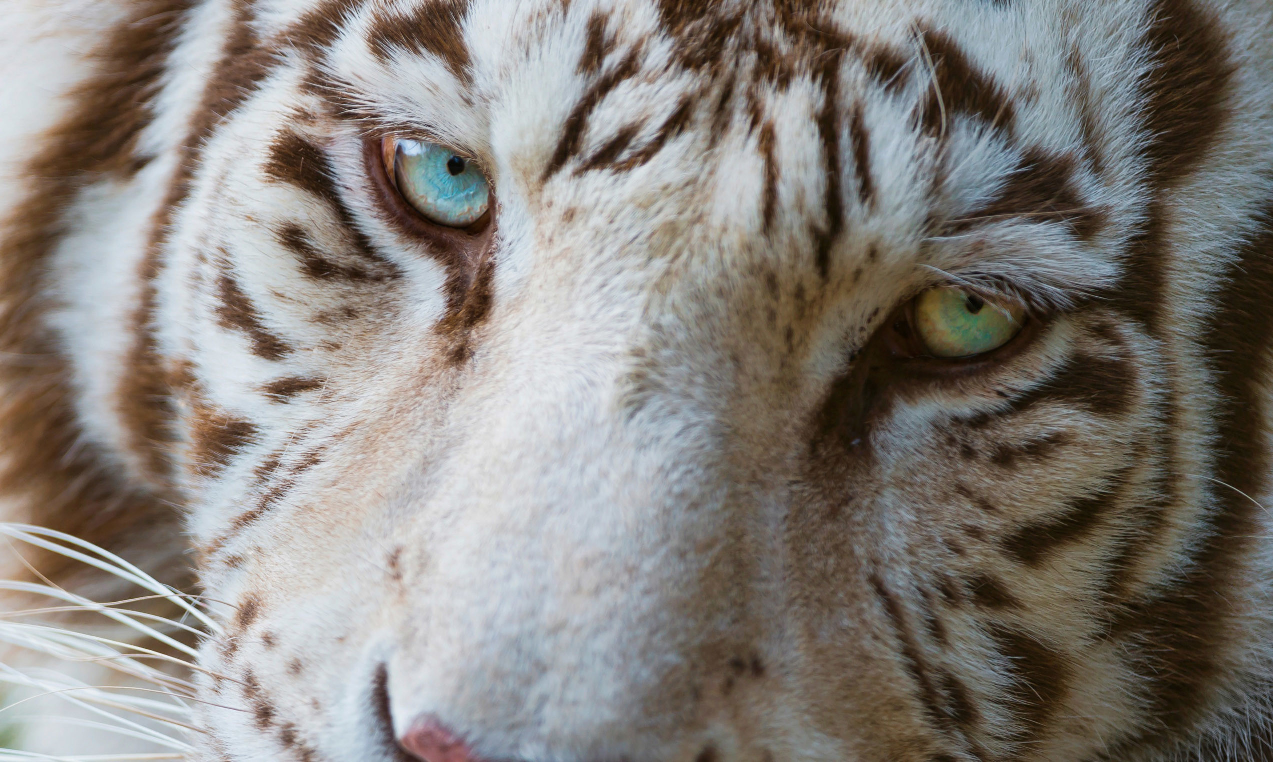IOK33: Cool Animal Wallpapers, Awesome Animal Backgrounds .