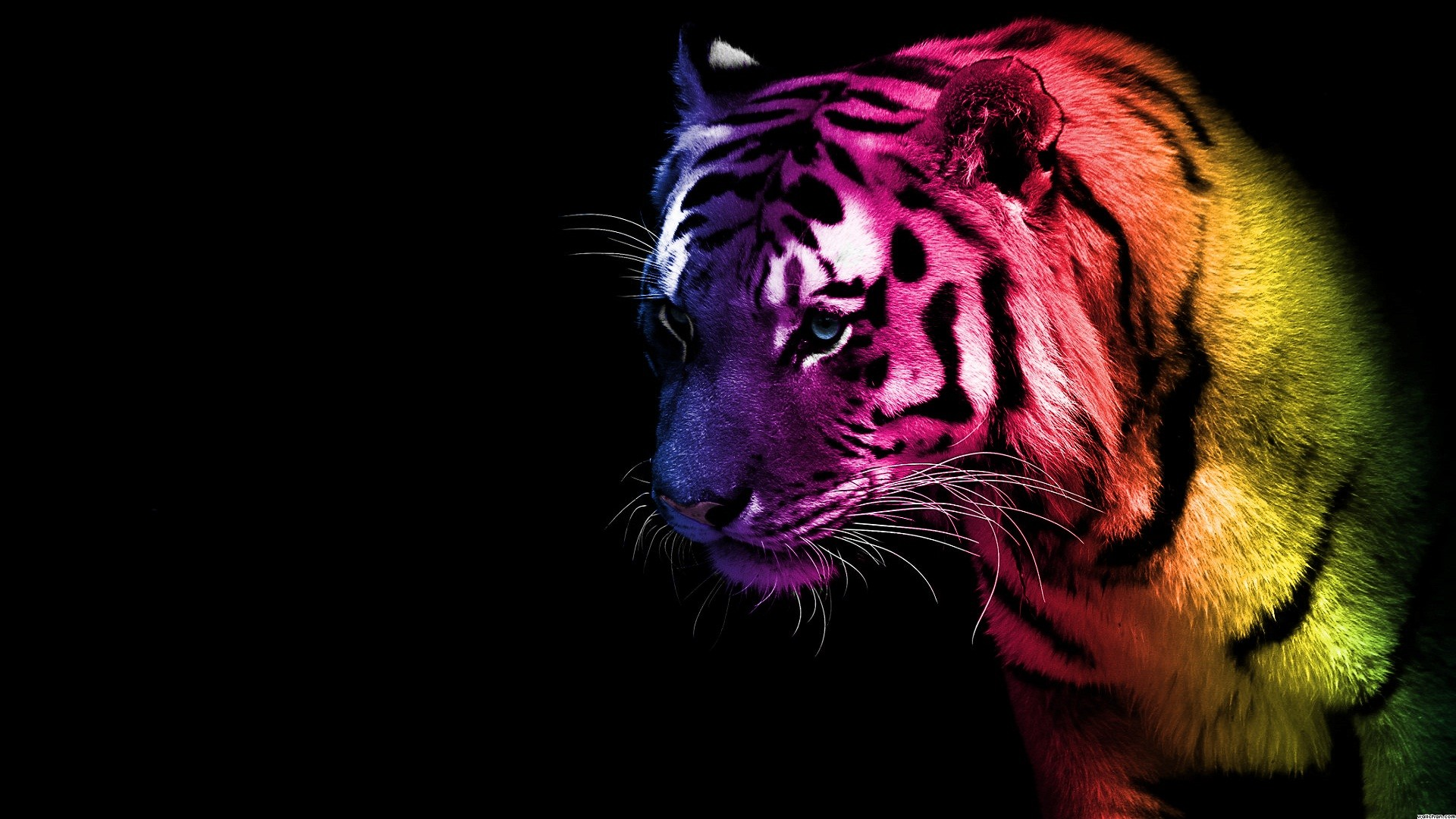 purple fantasy | Tiger – animals, color, tiger, wallpaper – Full HD Best