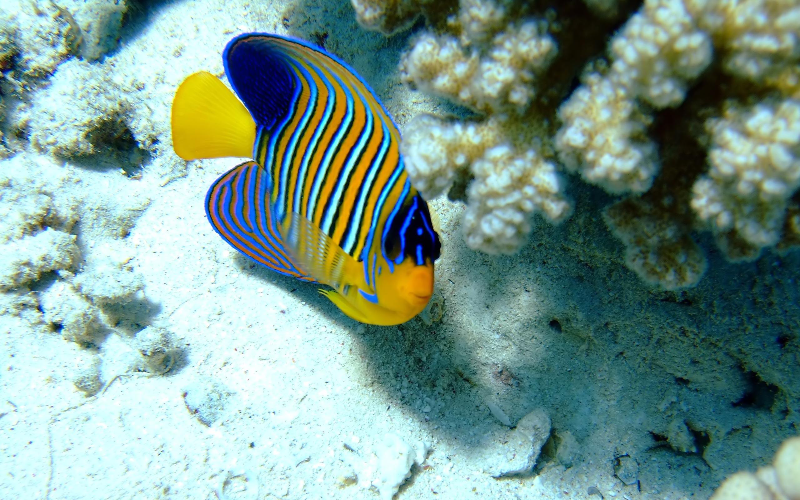 Ocean Animals – Animals Wallpaper (27960332) – Fanpop