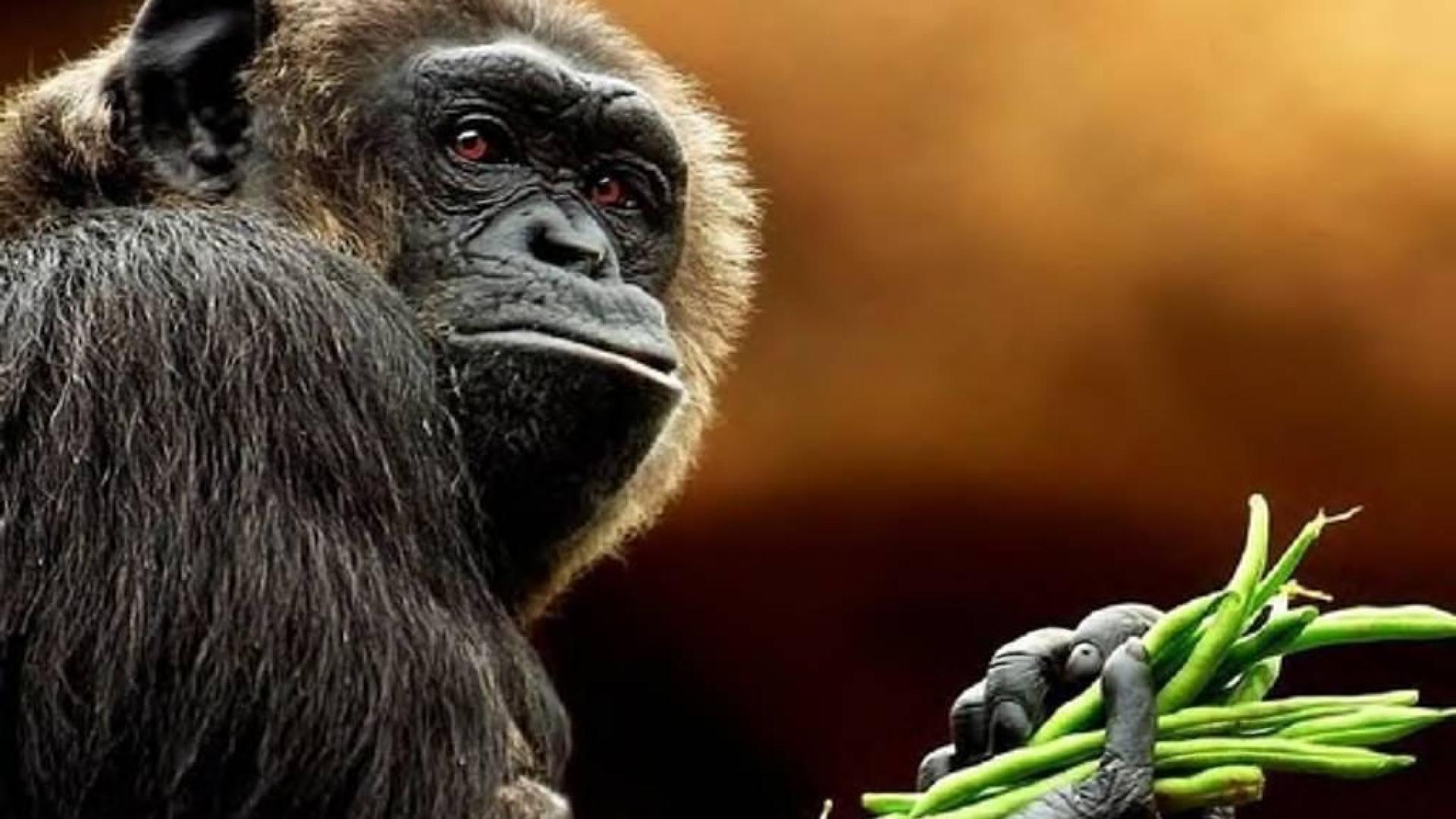 Download Animal Photos, Best Friend, High Resolution, Desktop Images, Animal  Background Images