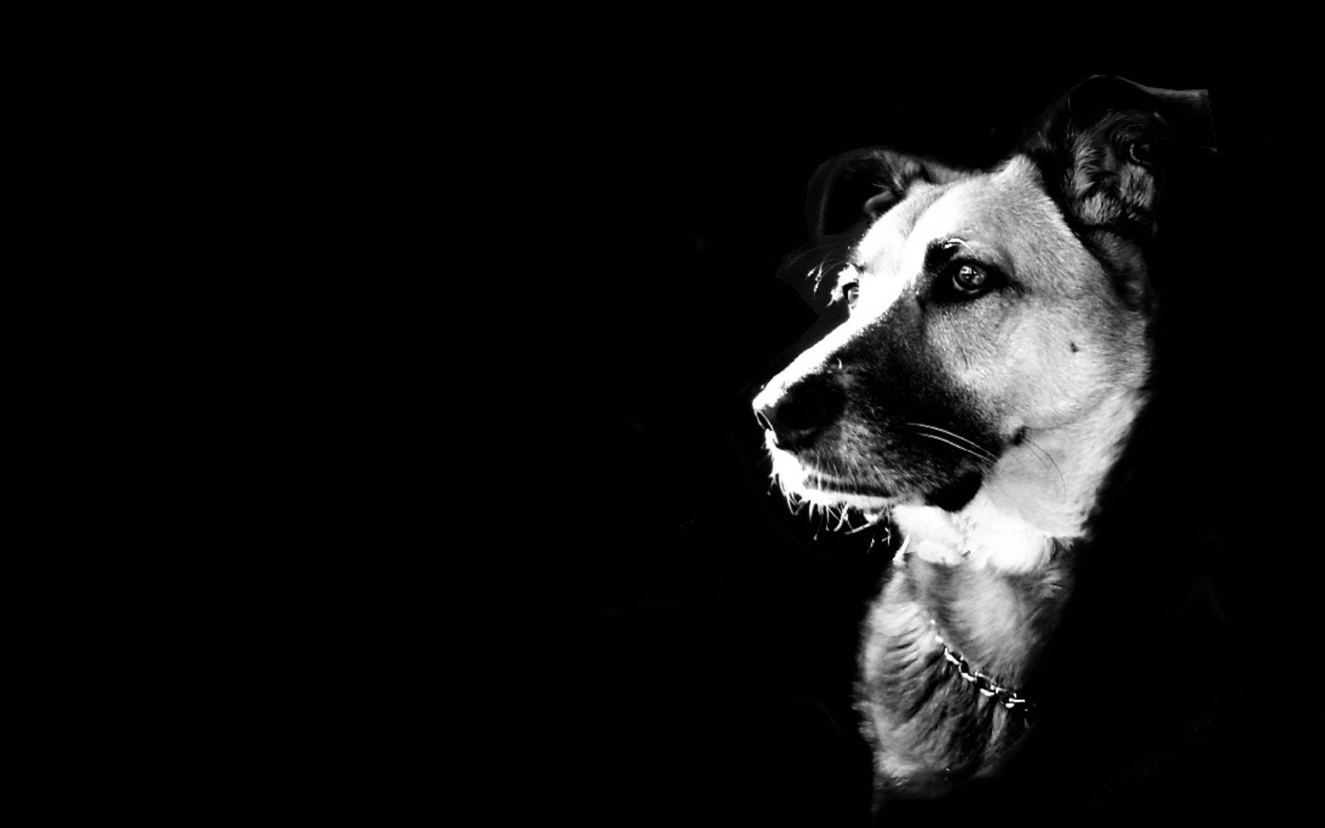 Black And White Animal Wallpapers – Wallpaper Cave