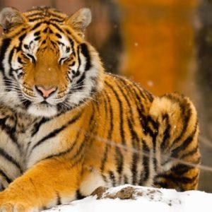 Cool Animal