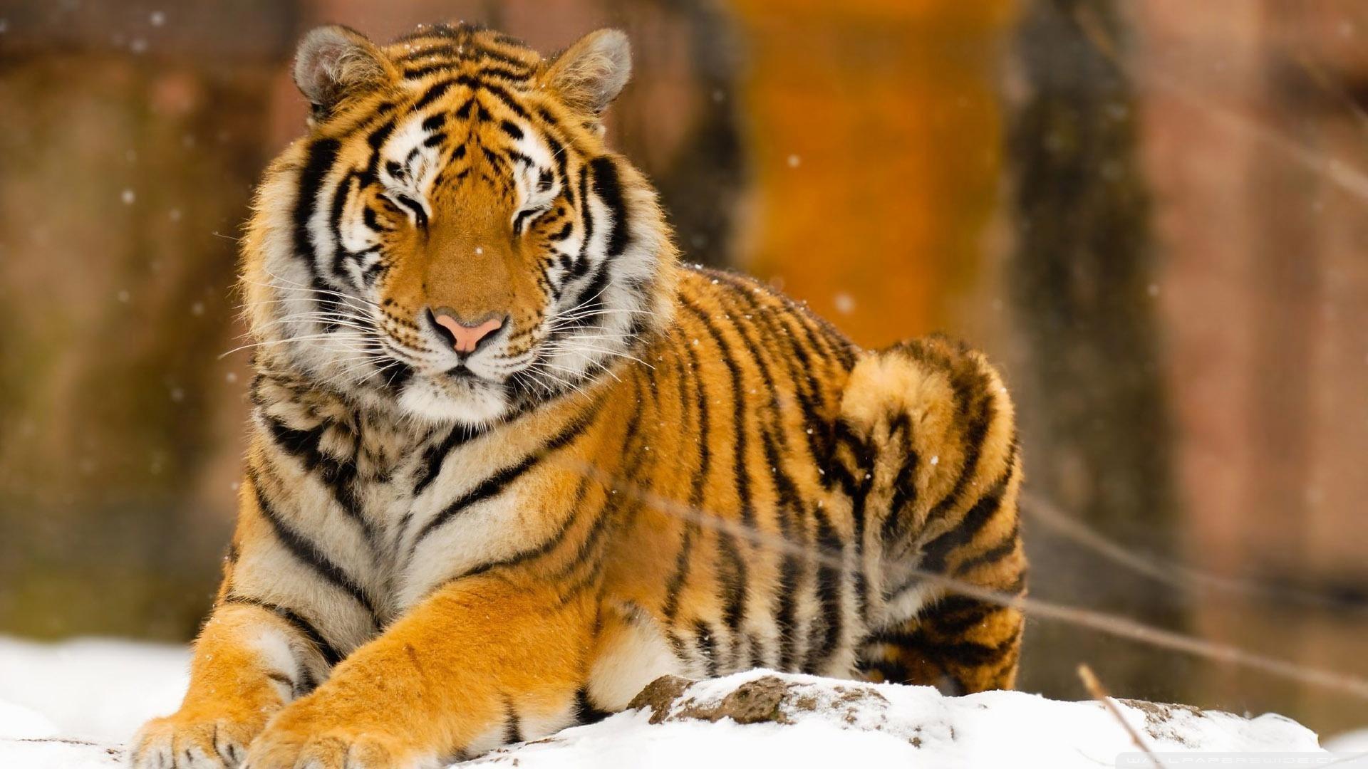 52+ Cool Animal