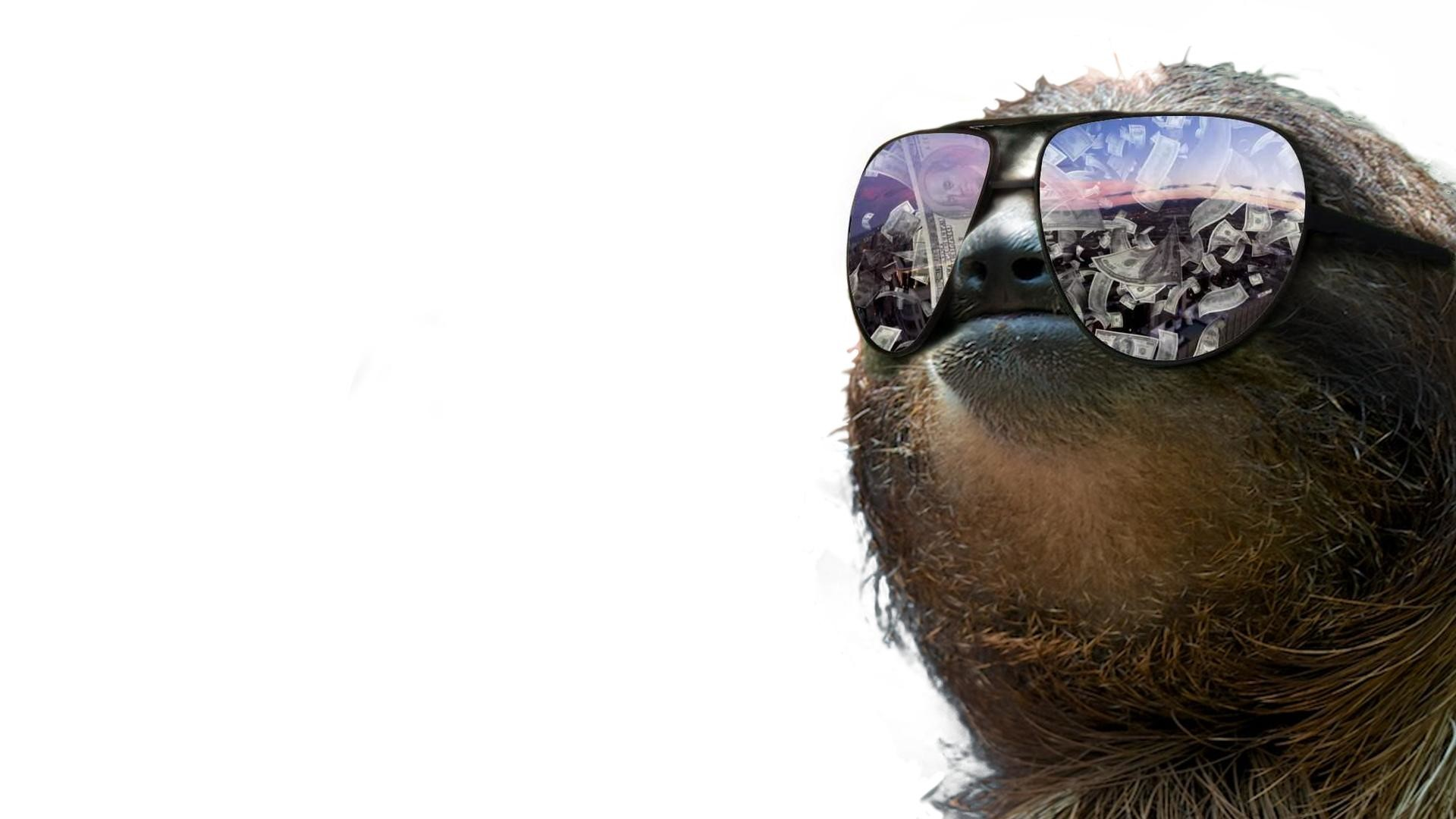 Sloth Wallpaper Design Ideas ~ A Very Slothy Wallpaper Xpost From .