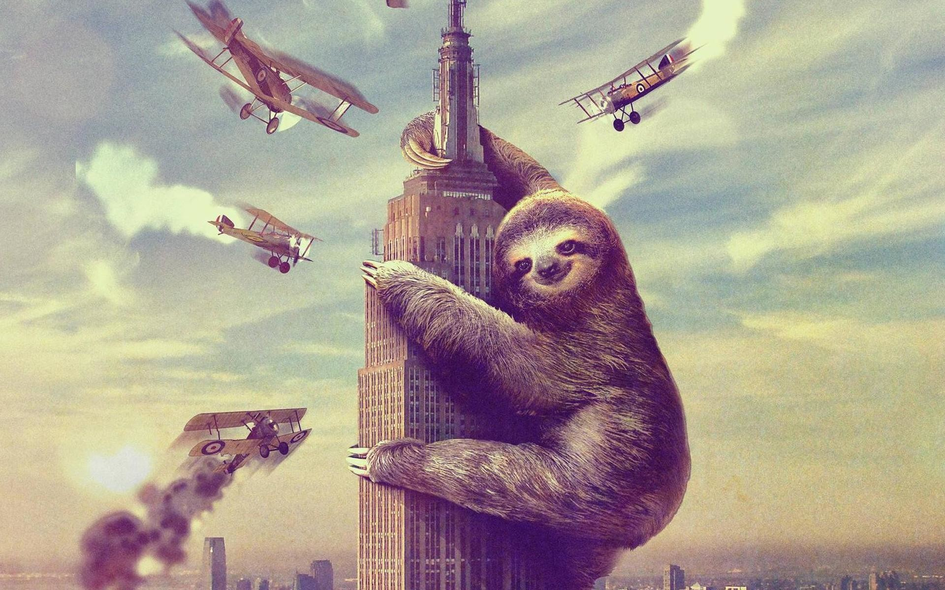 Sloth HD pictures Sloth full hd wallpapers