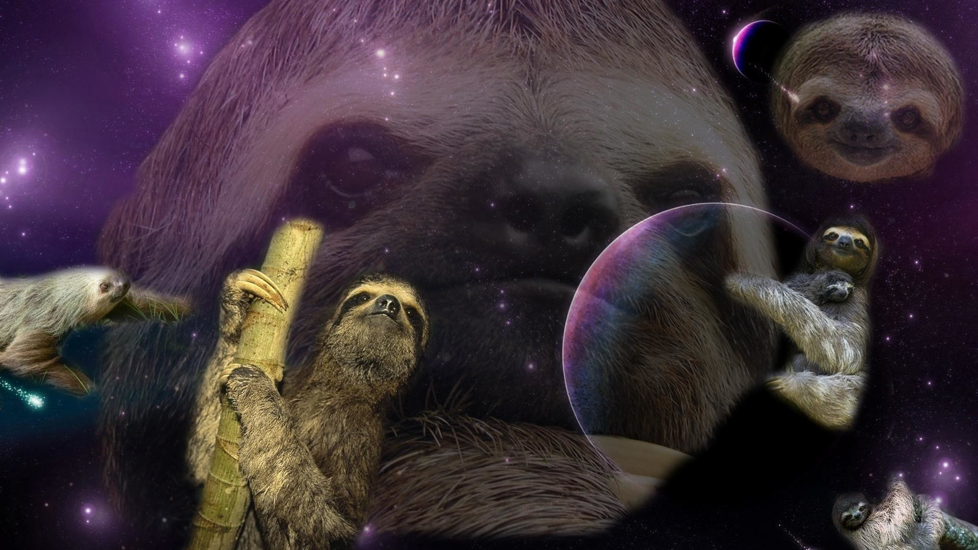 Sloth-Wallpaper-Free-Download