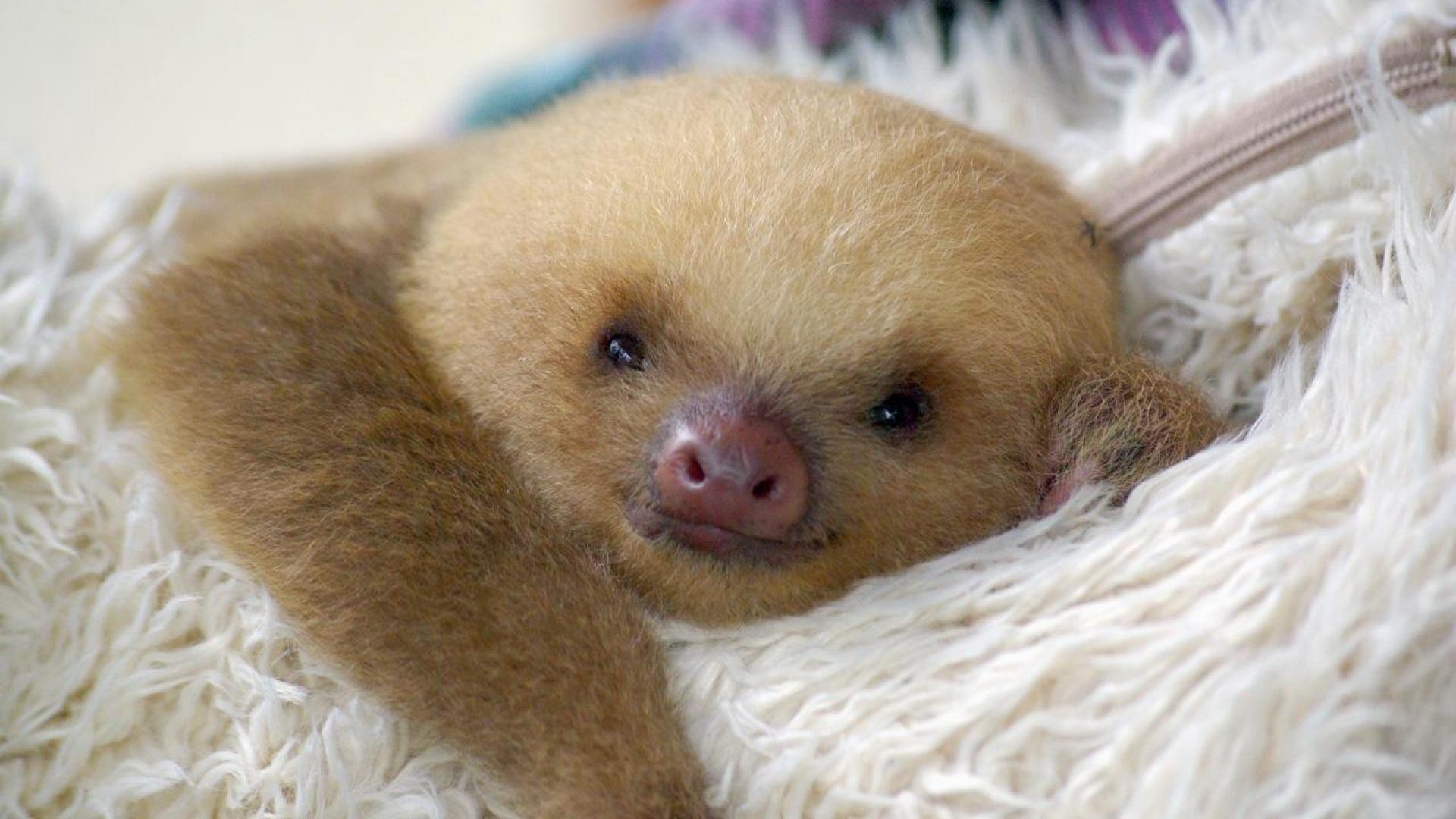 Sloth-HD-Photo