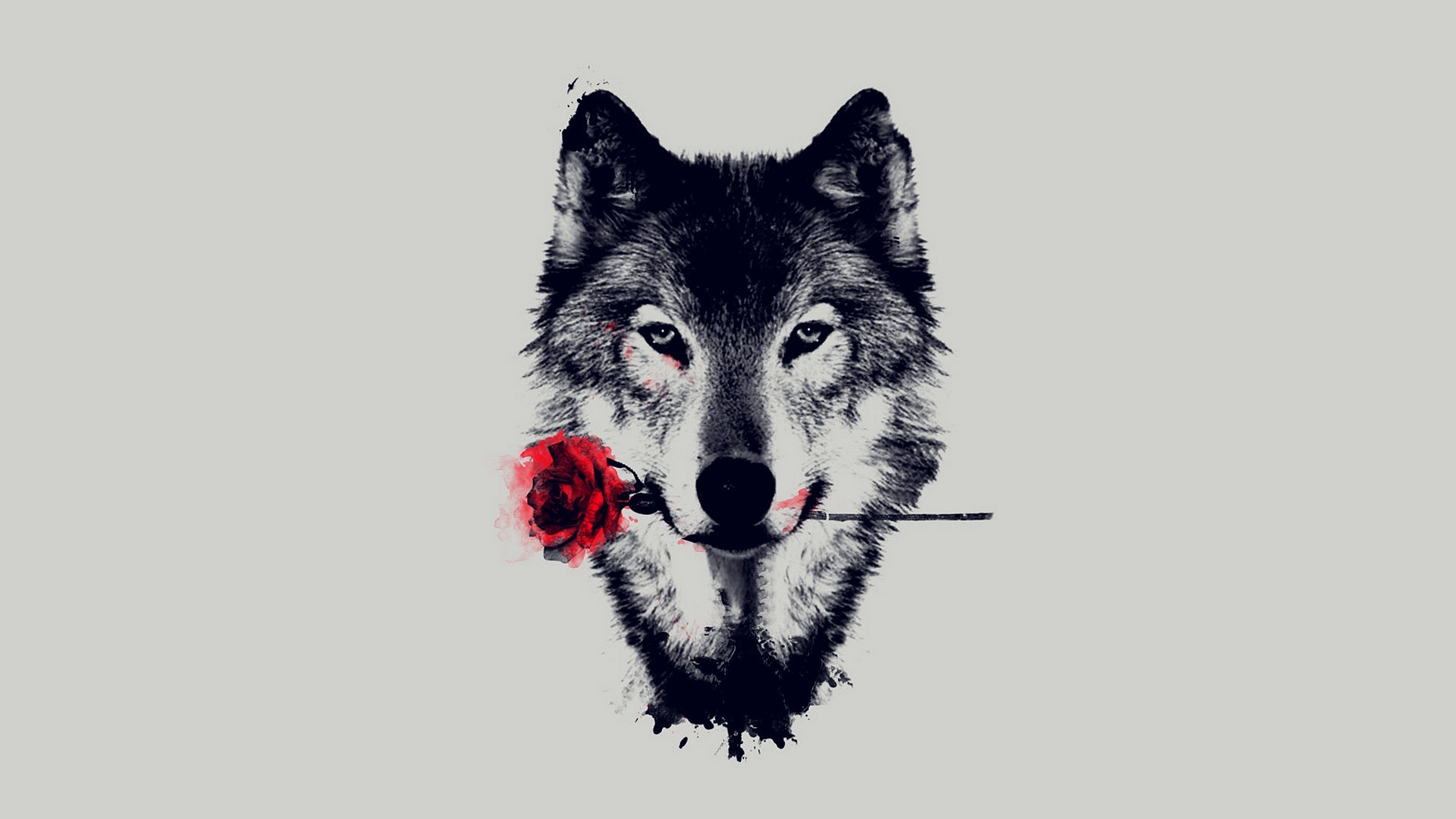 Wolf HD Wallpapers Backgrounds Wallpaper   HD Wallpapers   Pinterest   Wolf  wallpaper, Wallpaper and Wallpapers android