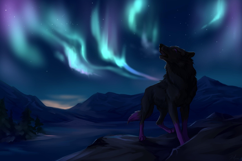 Black Wolf Desktop Background HD   deskbg.com
