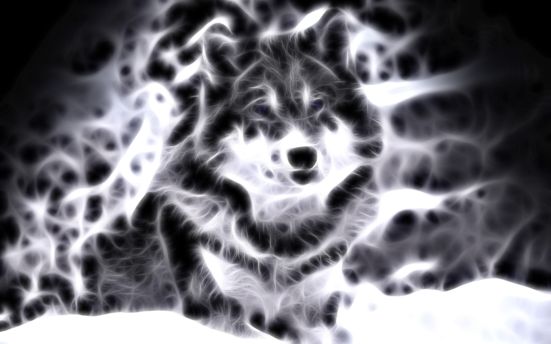 lightanimals   Cool Animal Wallpaper Light Wolf Wallpapers For gt Cool  Animal