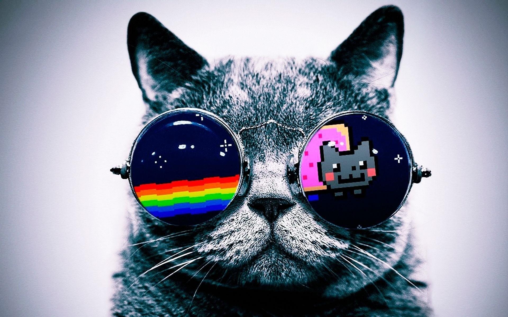 Cool Macro Nyan Cat Glasses Fabric Poster 21 x 13 Decor 02