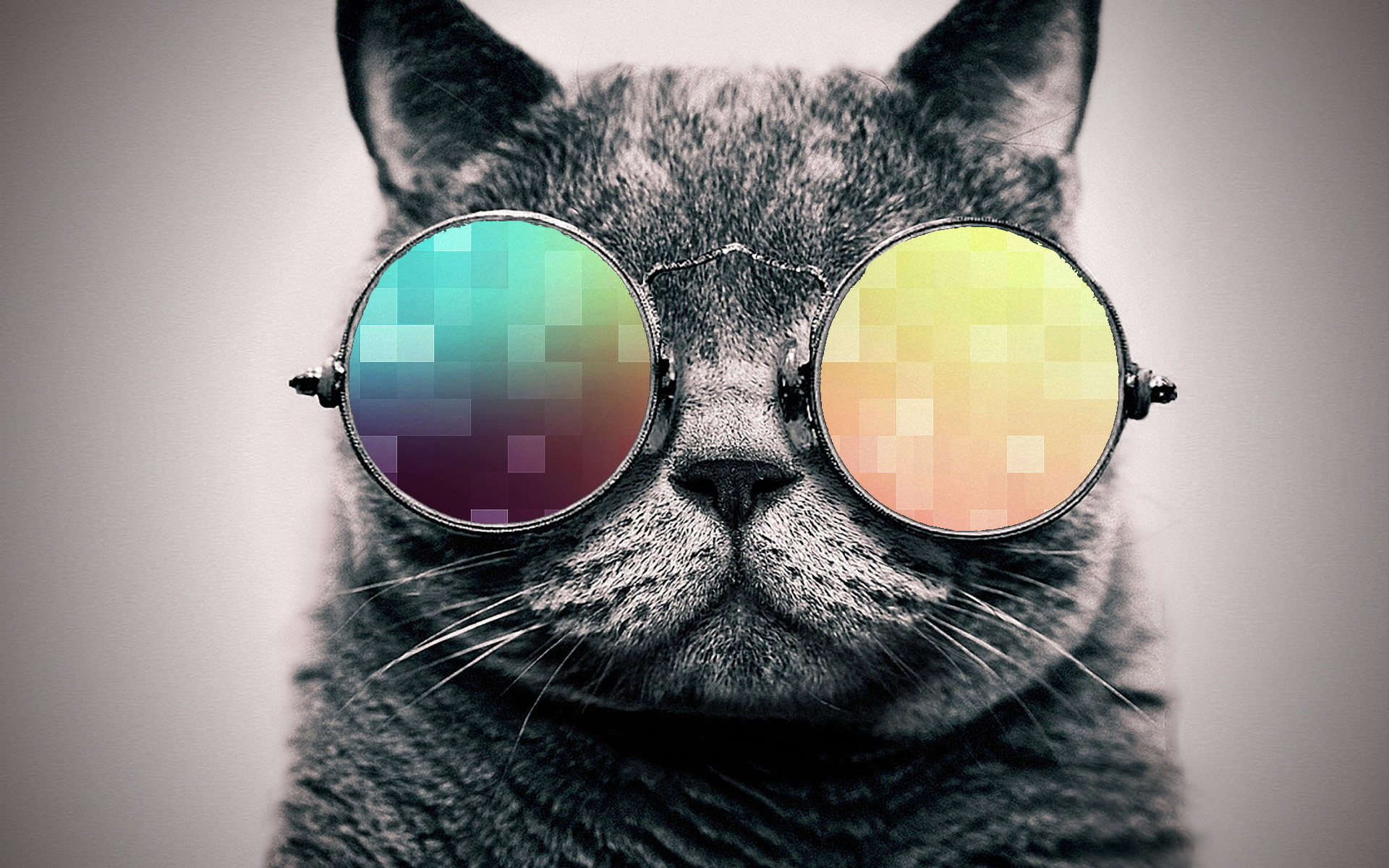 cool cat wallpaper. By ToValhalla Download 1920 X 1200