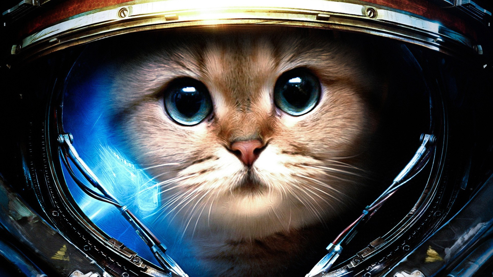 Cat astronaut wallpapers and images – wallpapers, pictures, photos