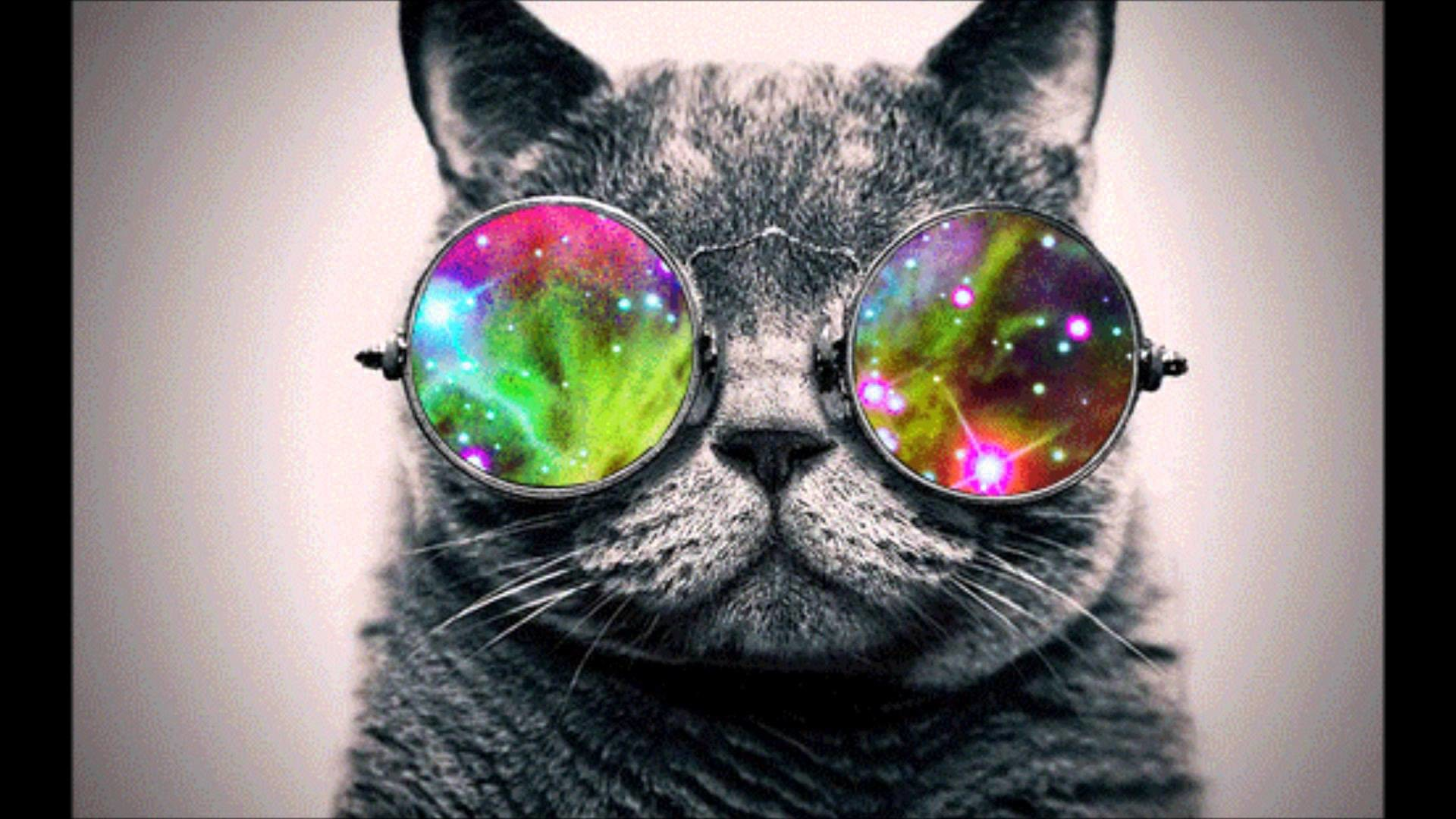 Cool Cat Picture from Cats. Cool Cat with shades