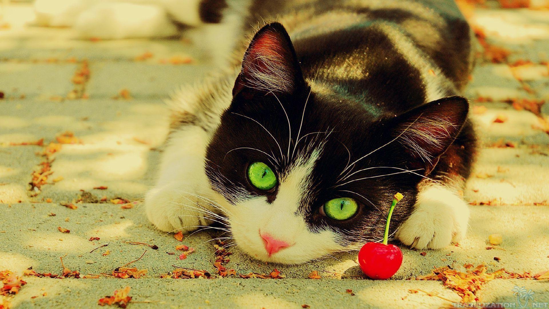 Christmas-Cat-HD-b-wallpaper-wp4004353