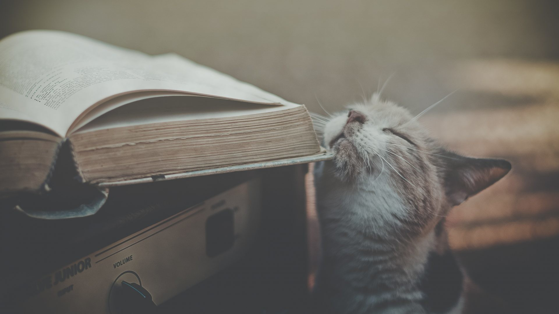 Books Tag – Cats Retro Nature Books Wallpapers Iphone for HD 16:9 High  Definition