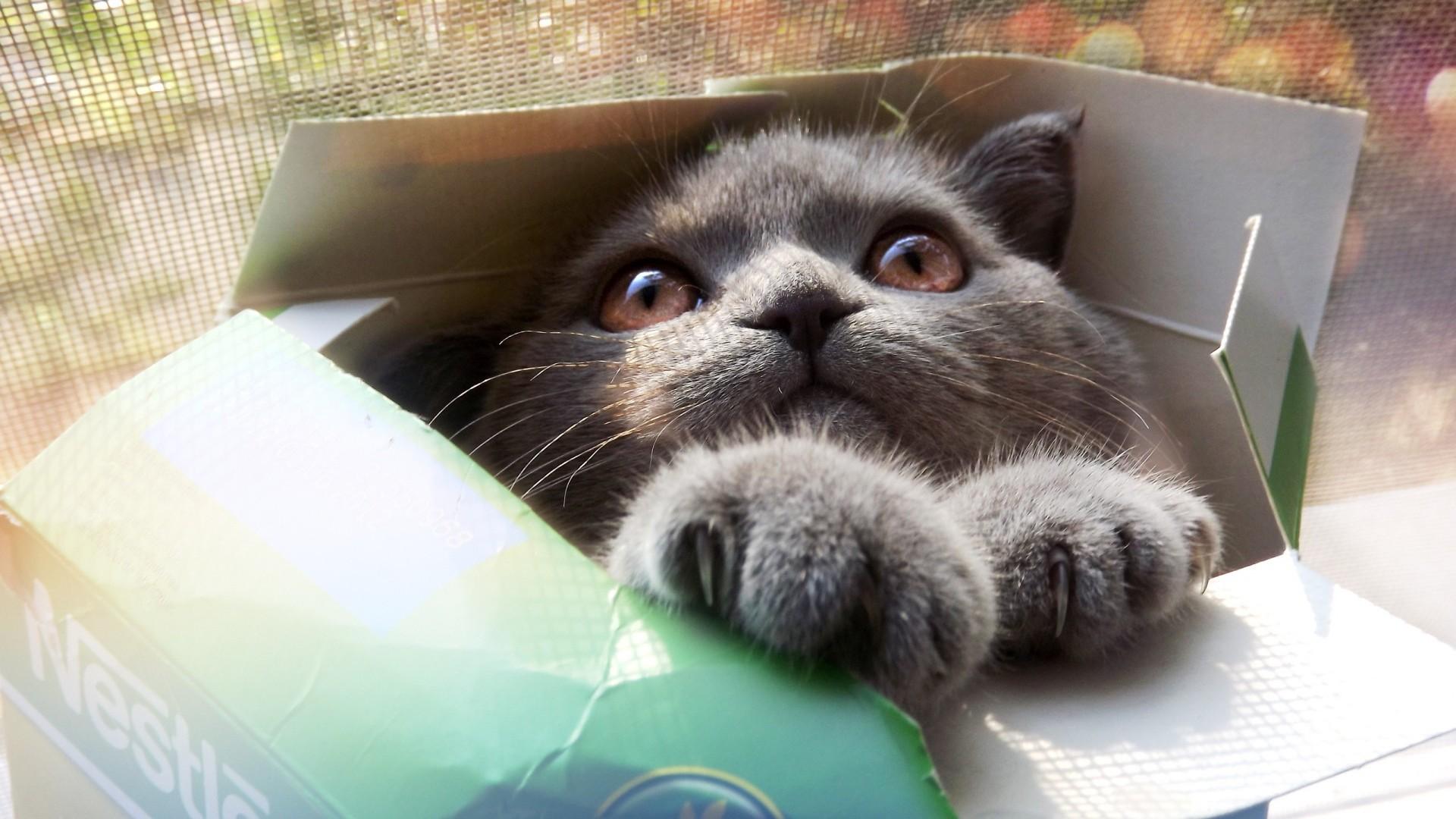 Wallpaper kitten, cat, box, cool cat, funny cat, funny
