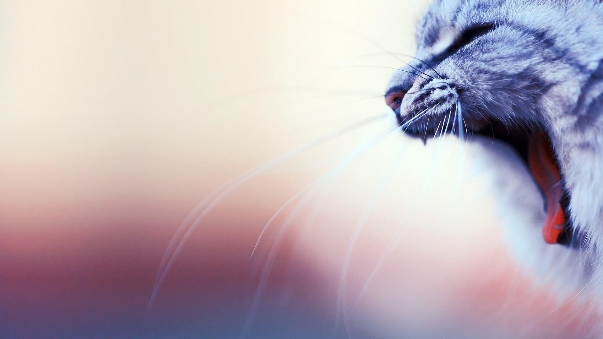 Cool Cat Mood Wallpaper 43374