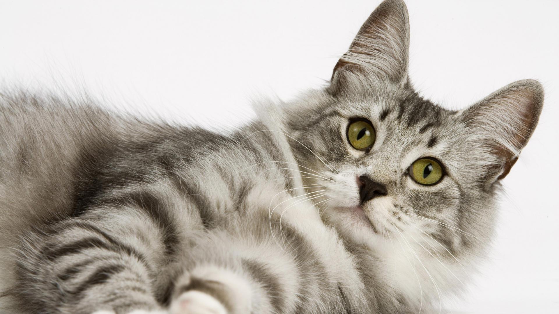 Cool-cat-wallpaper-free-download