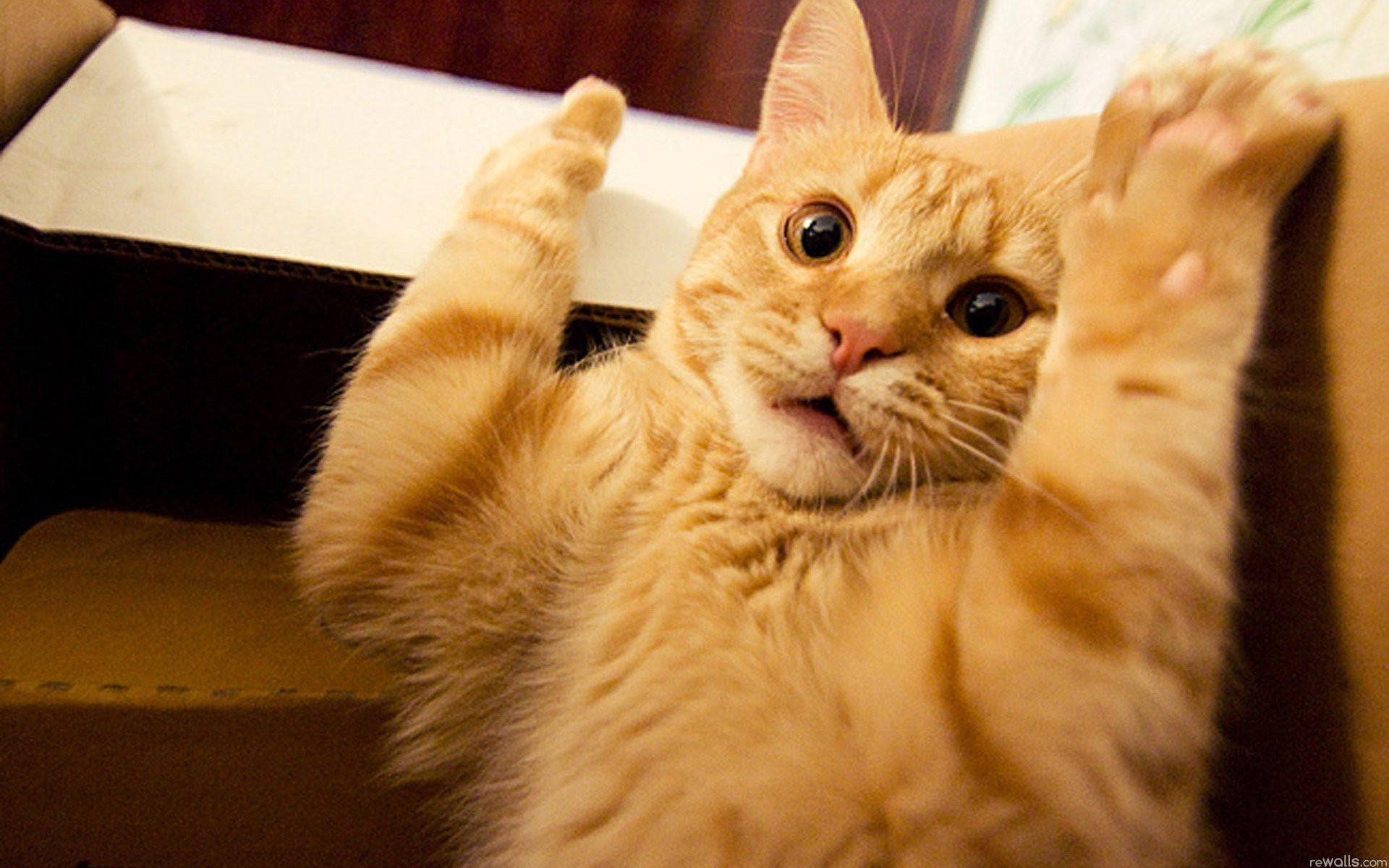 Funny Cats Being Scared 19 Cool Hd Wallpaper