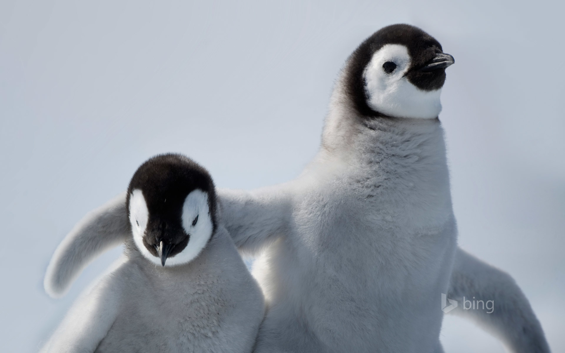 Penguin HD Wallpapers Backgrounds Wallpaper   HD Wallpapers   Pinterest    Wallpaper, Wallpaper backgrounds and Painting pictures