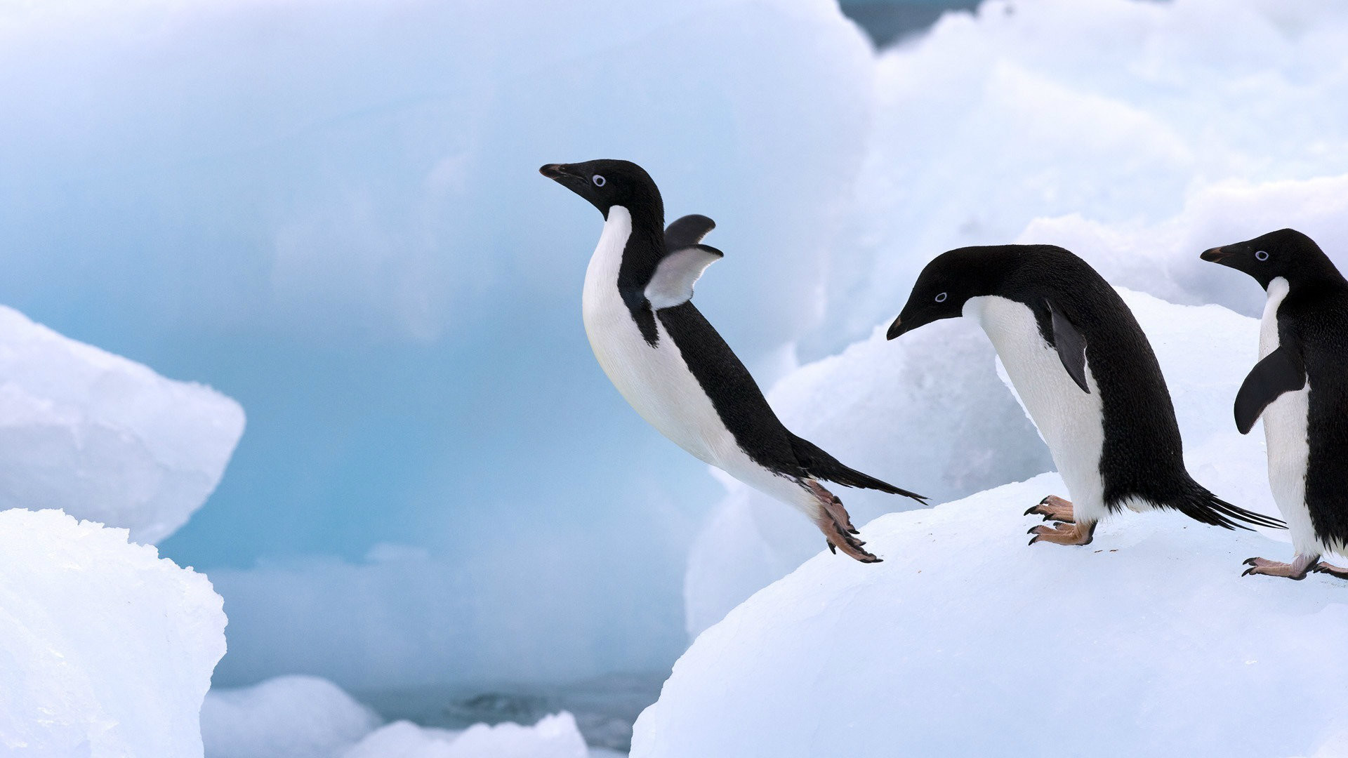 Jumping Penguin HD Wallpapers