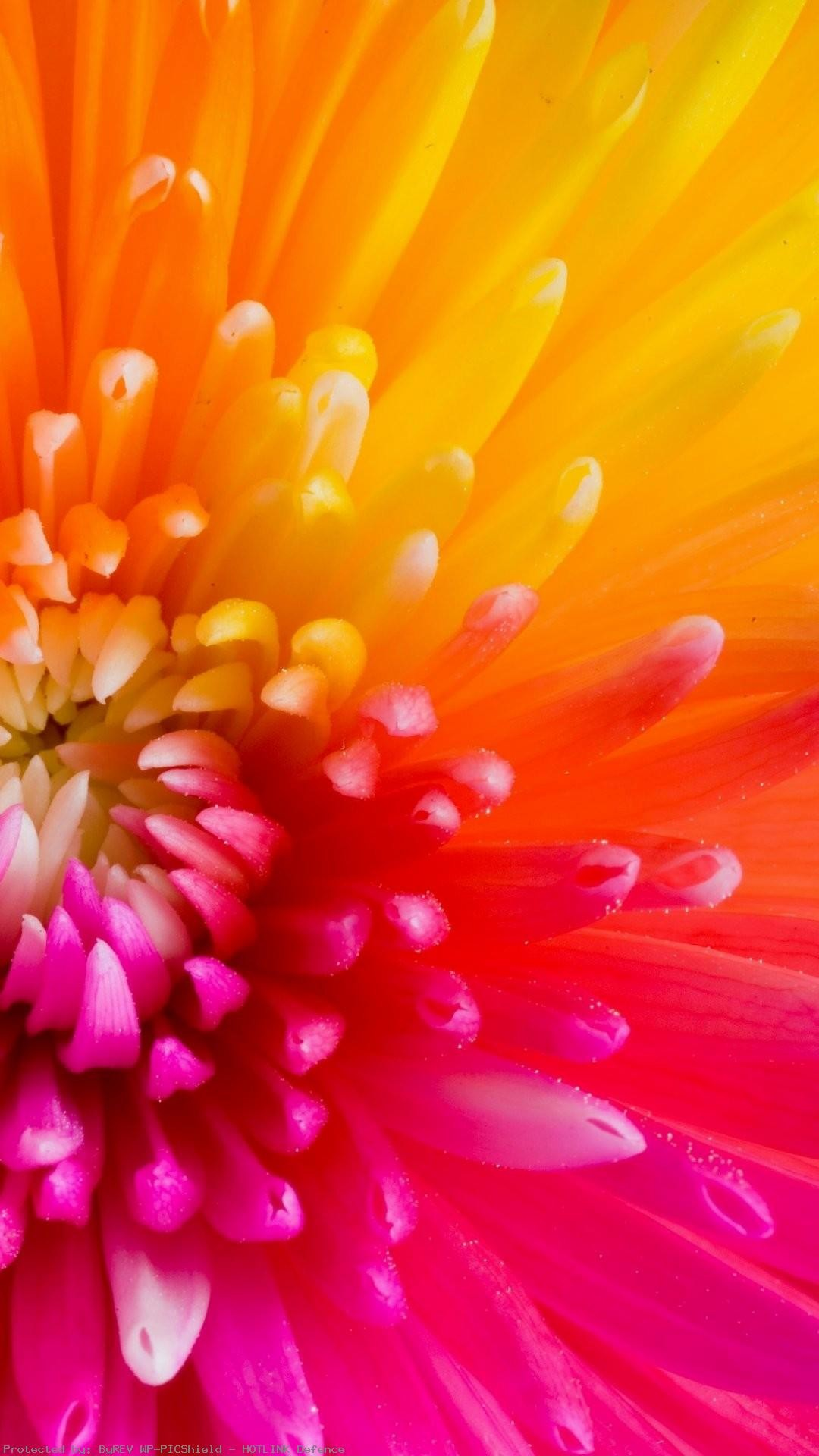 Colorful-Tropical-Flowers-iPhone-Plus-Flowers-iPhone-Plus-