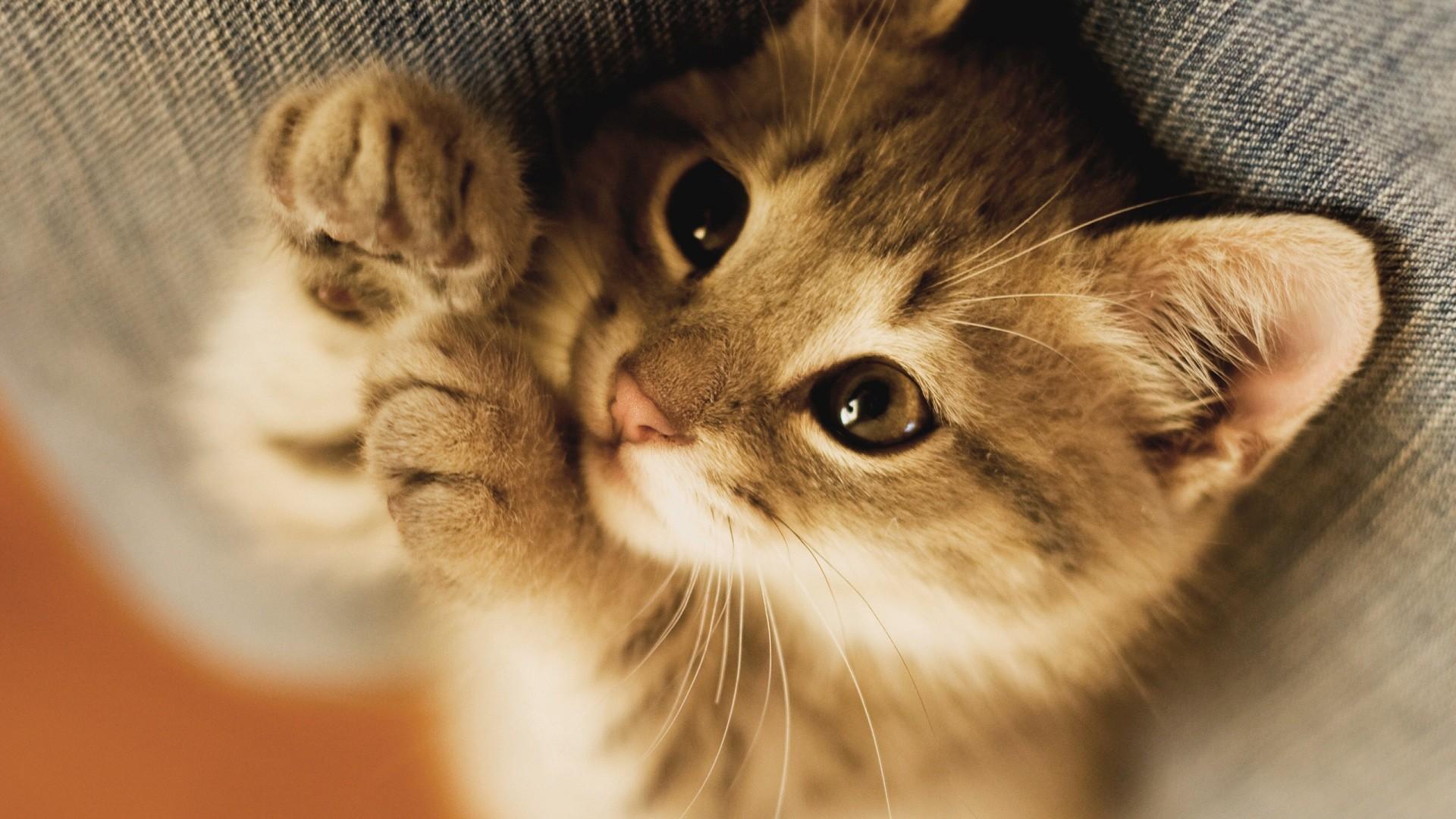 Full HD p Cat Wallpapers HD, Desktop Backgrounds Cat Wallpapers Wallpapers)