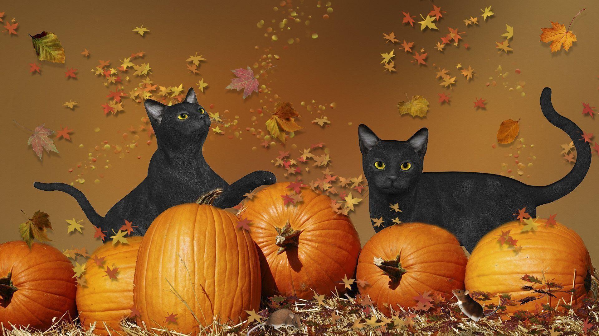 Halloween Black Cat Wallpaper   Cats Wallpaper HD