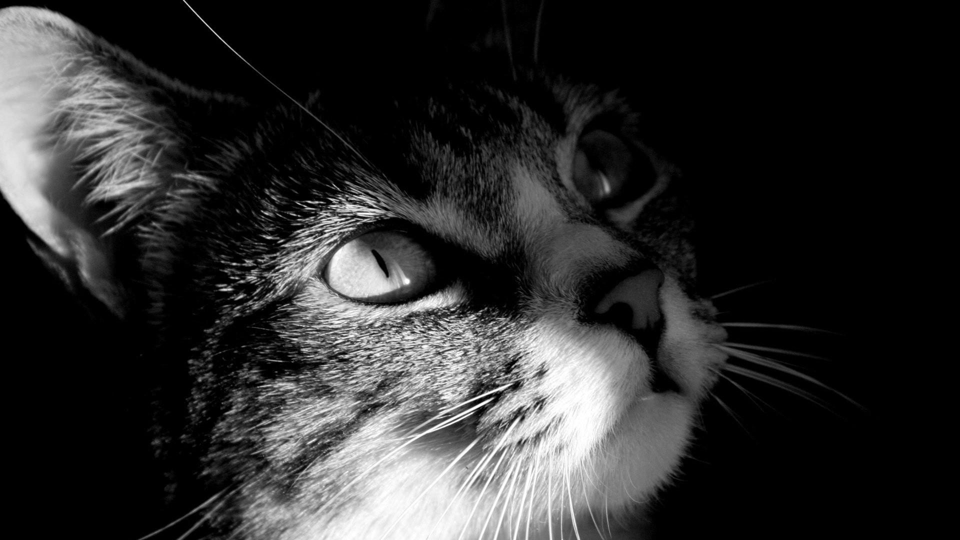 … cat wallpaper 4 i love cats cute cat kitten pictures …
