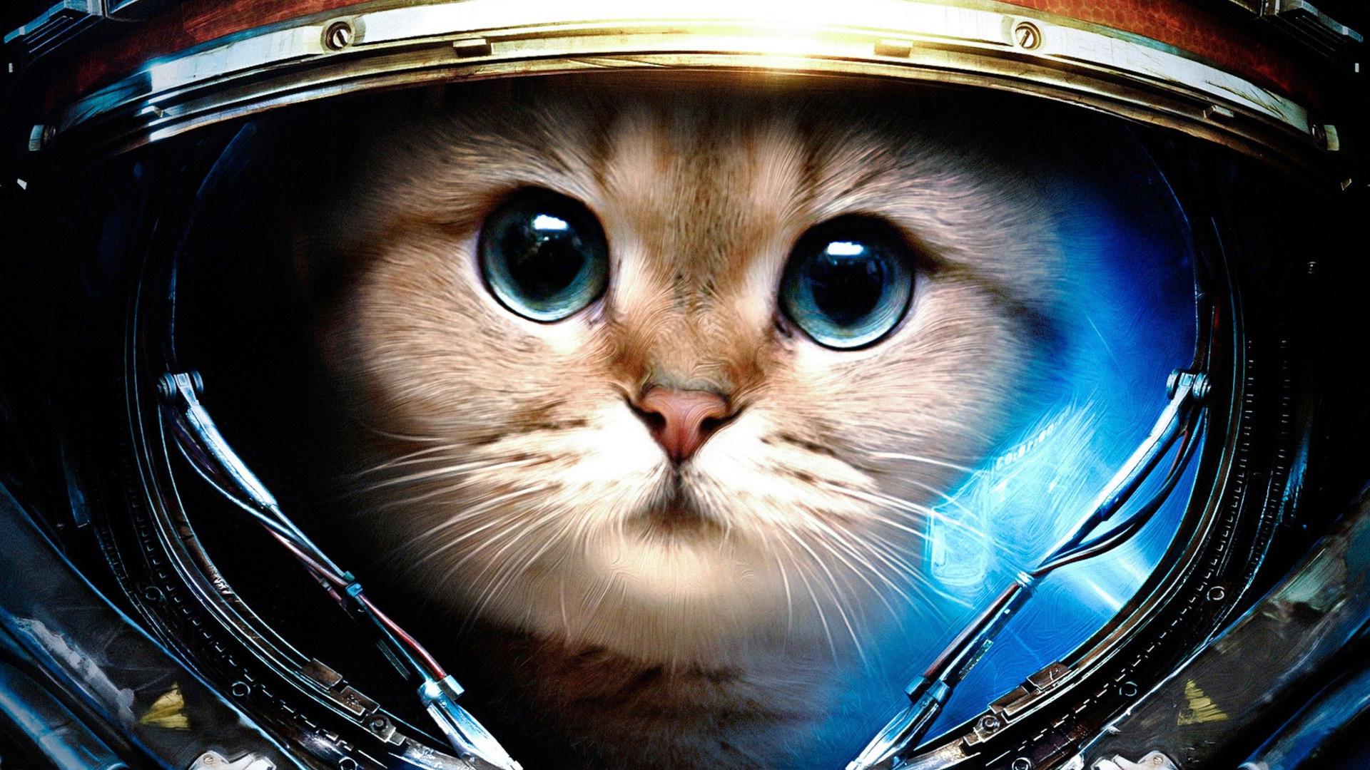 Space Cat Wallpapers   wallpaper, wallpaper hd, background desktop