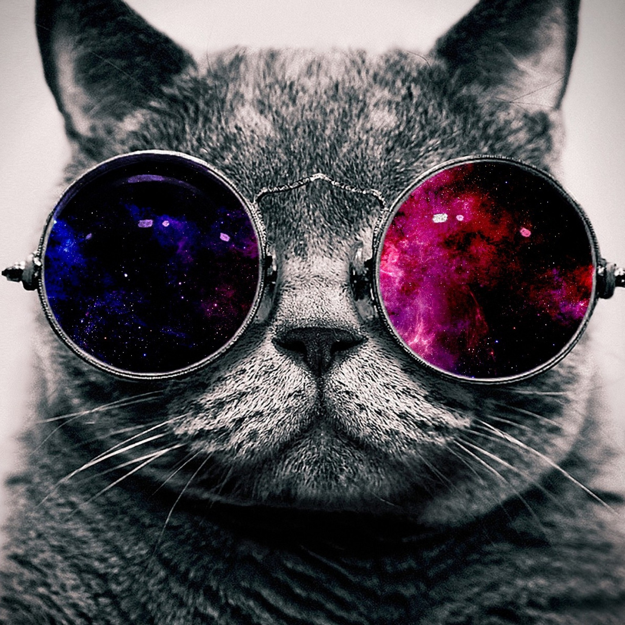 Preview wallpaper cat, face, glasses, thick 2048×2048