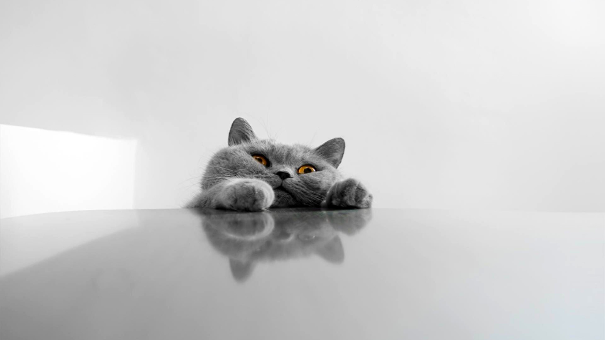 … wallpaper 19592 baltana; funny cat wallpapers pictures images …