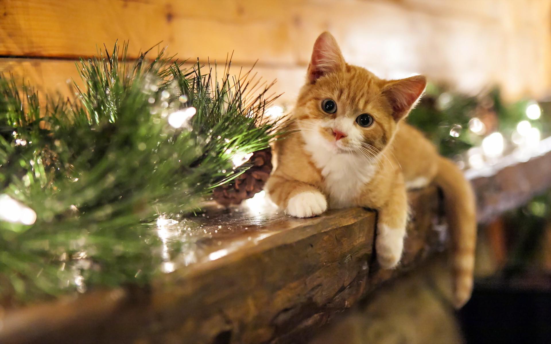 christmas cat wallpaper. Â«Â«
