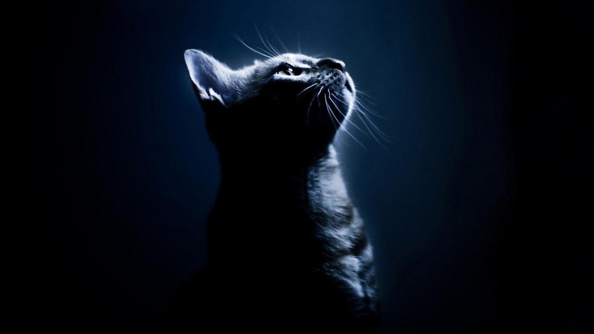 Black cat wallpaper download for desktop wallpaper