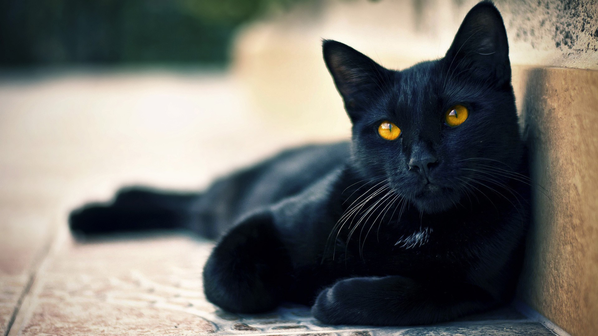 Beautiful & Cute Black Cats Wallpapers HD Pictures