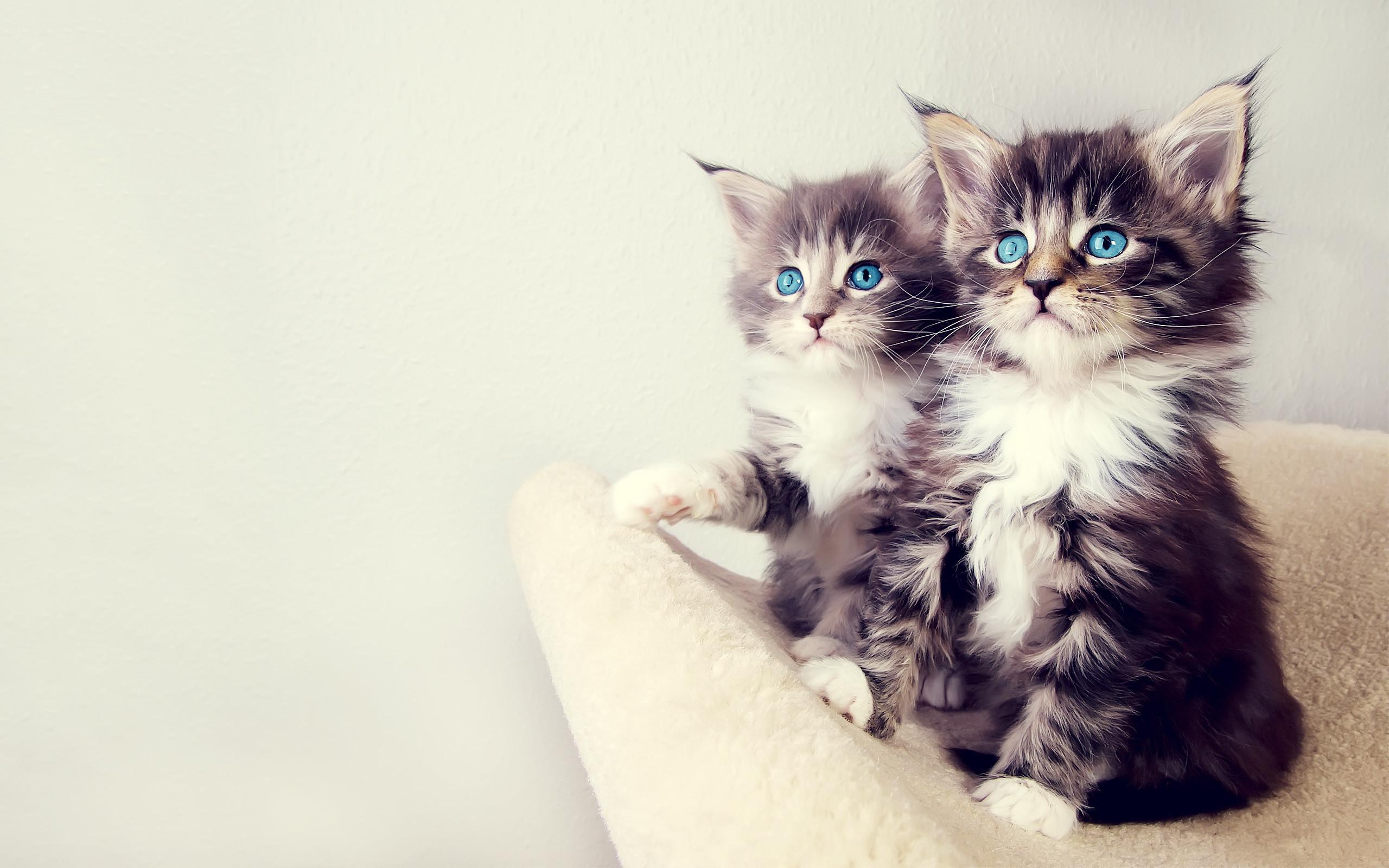 … cats wallpaper hd wallpapers pulse …